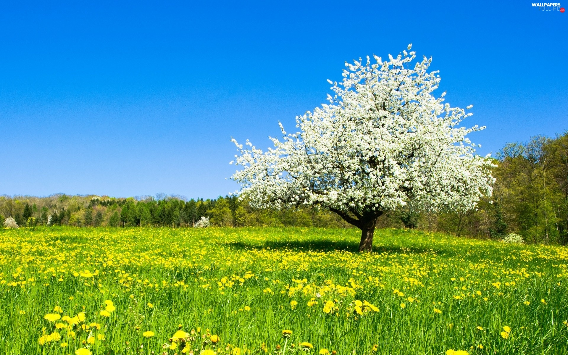 forest, trees, Meadow, Spring, Colourfull Flowers