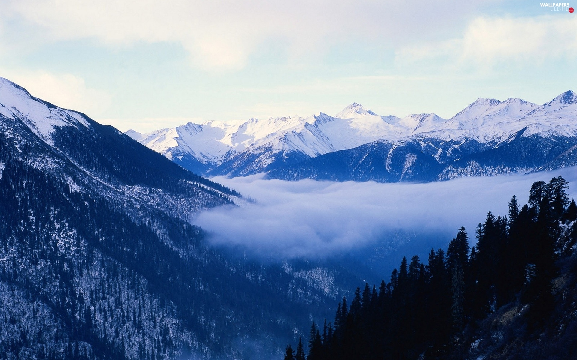 forest, peaks, Mountains, Fog, Snowy