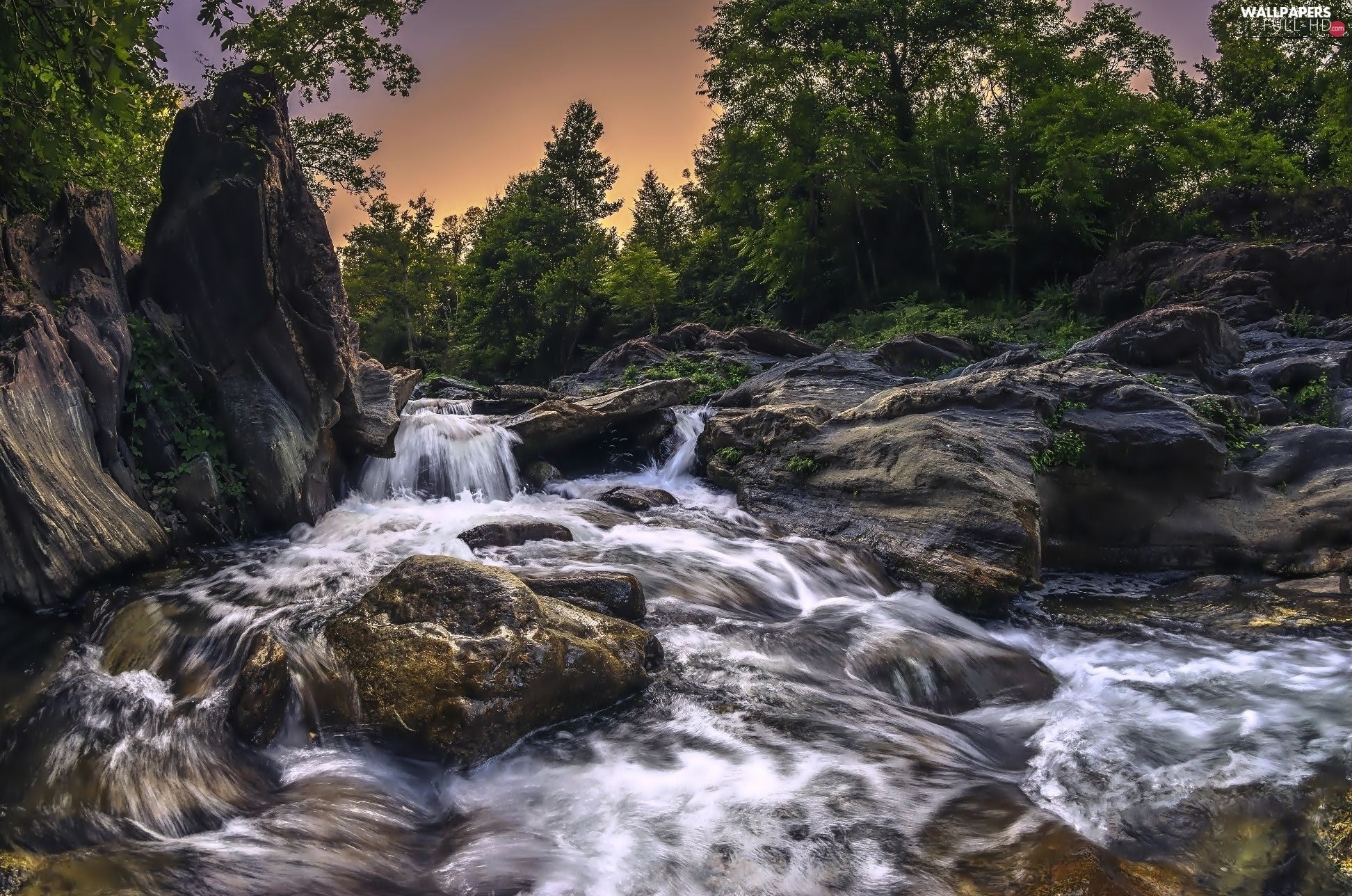 rocks, forest, stream