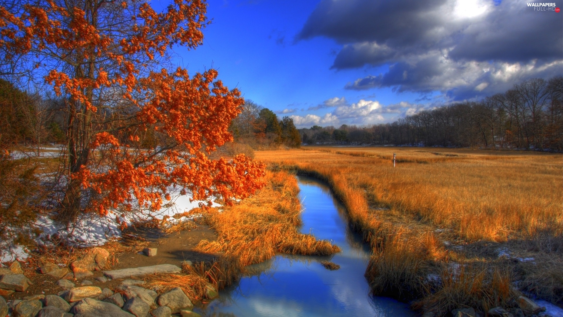 forest, Meadow, grass, autumn, trees, River