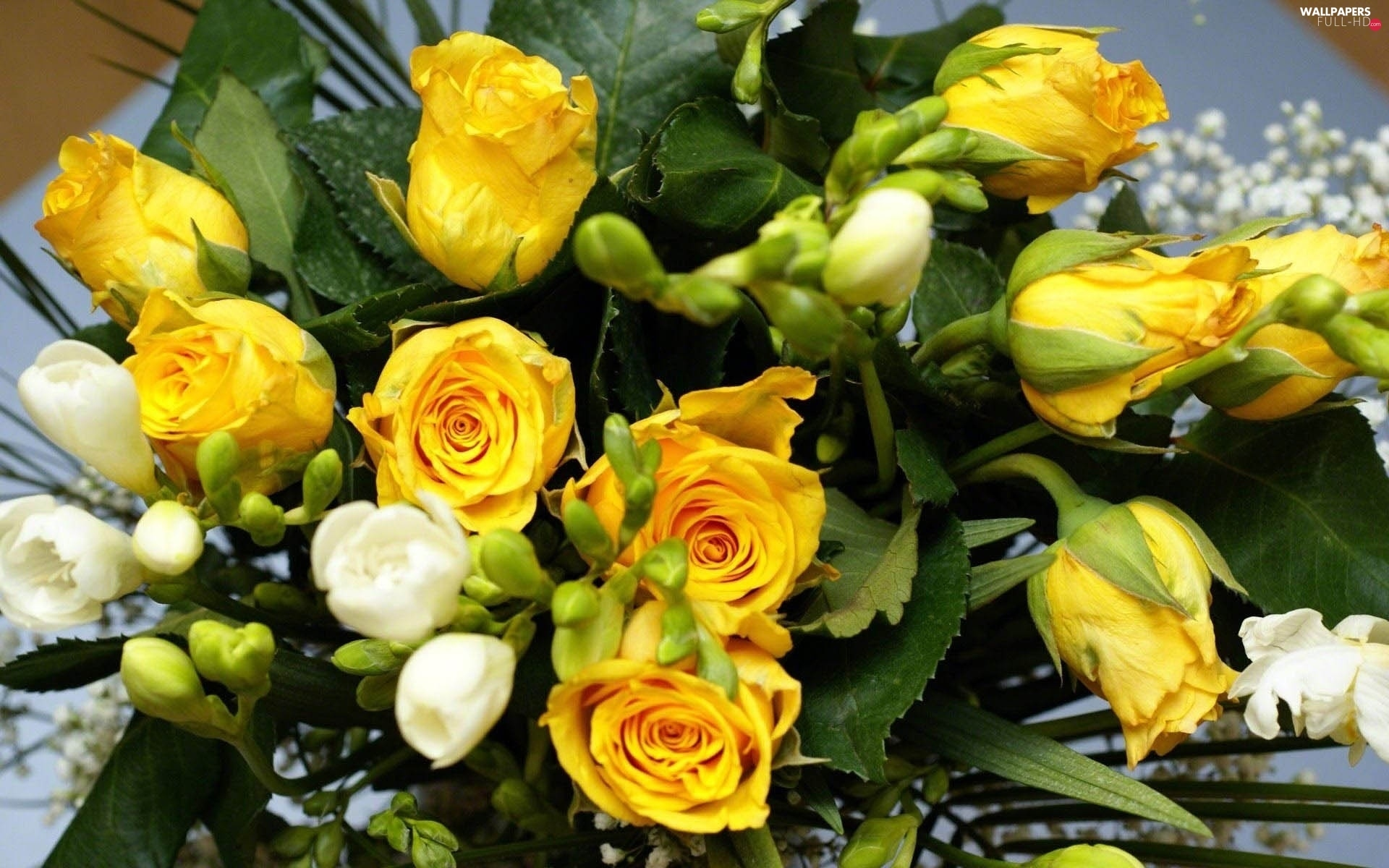 Freesias, White, Yellow, roses