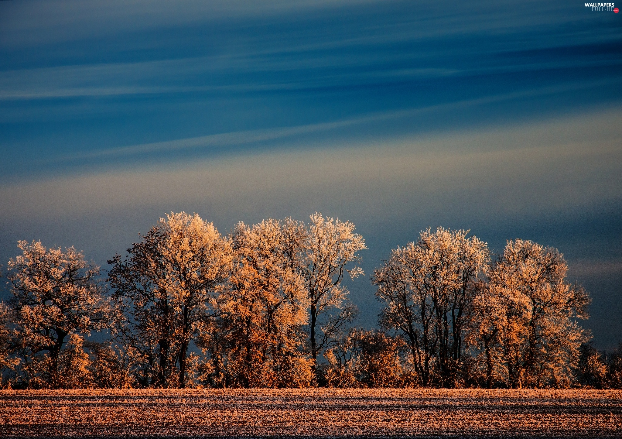 Frost, viewes, Sky, trees