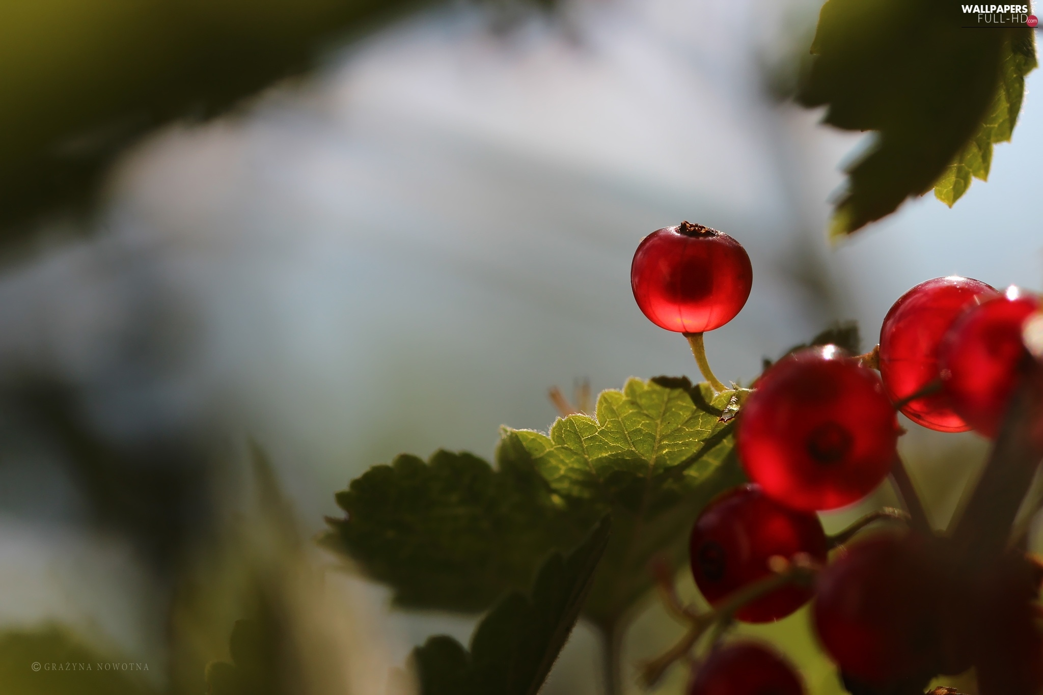 Fruits, The beads, Red Currants