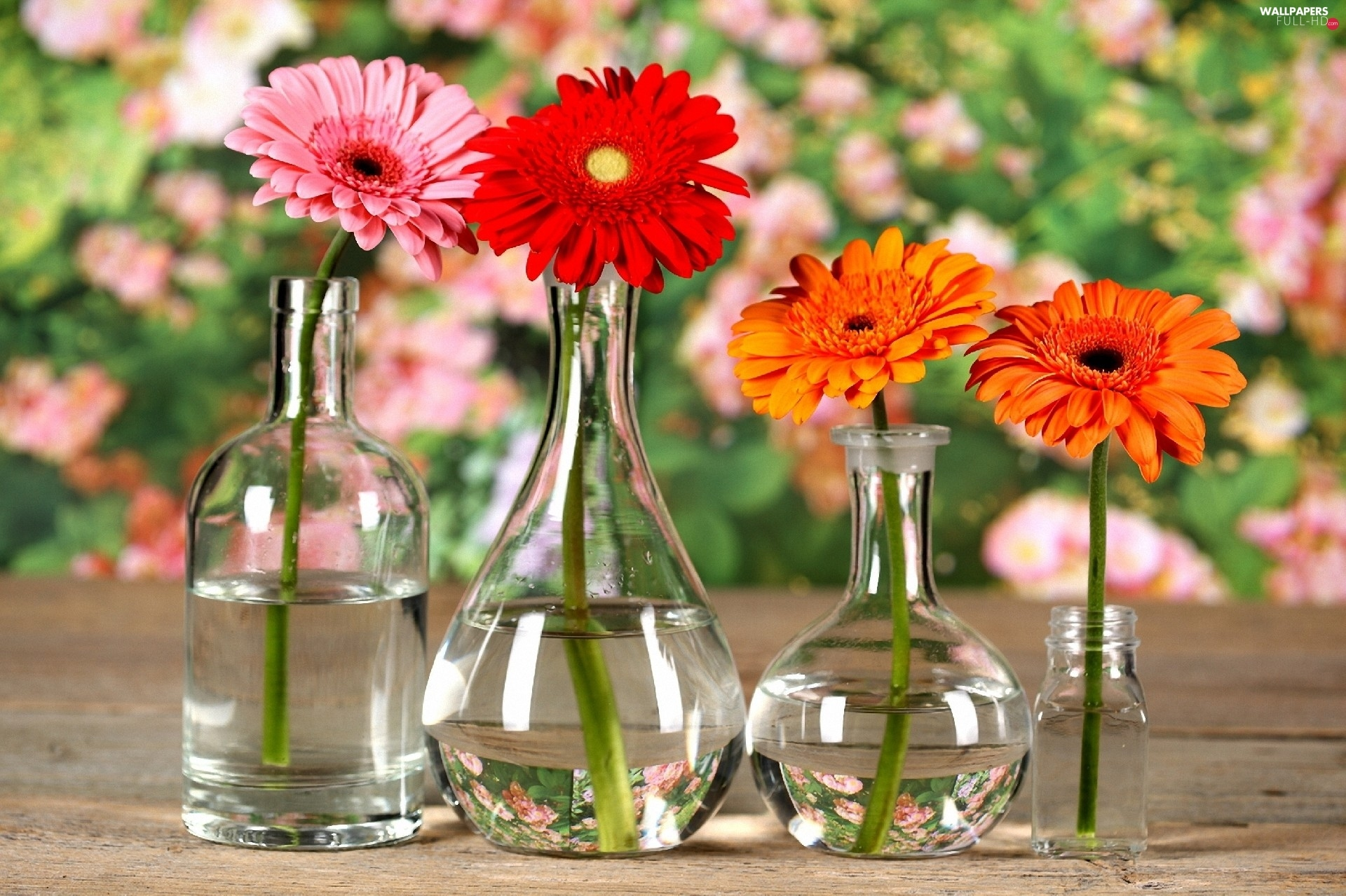Bottles, gerberas, glass