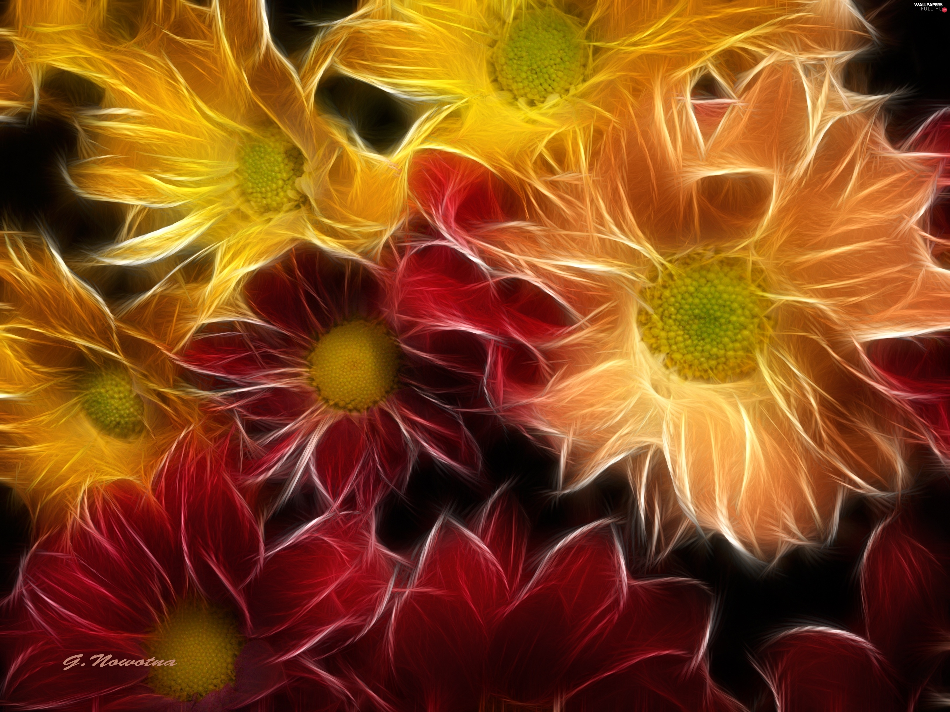 graphics, Margaretki, Red, Yellow