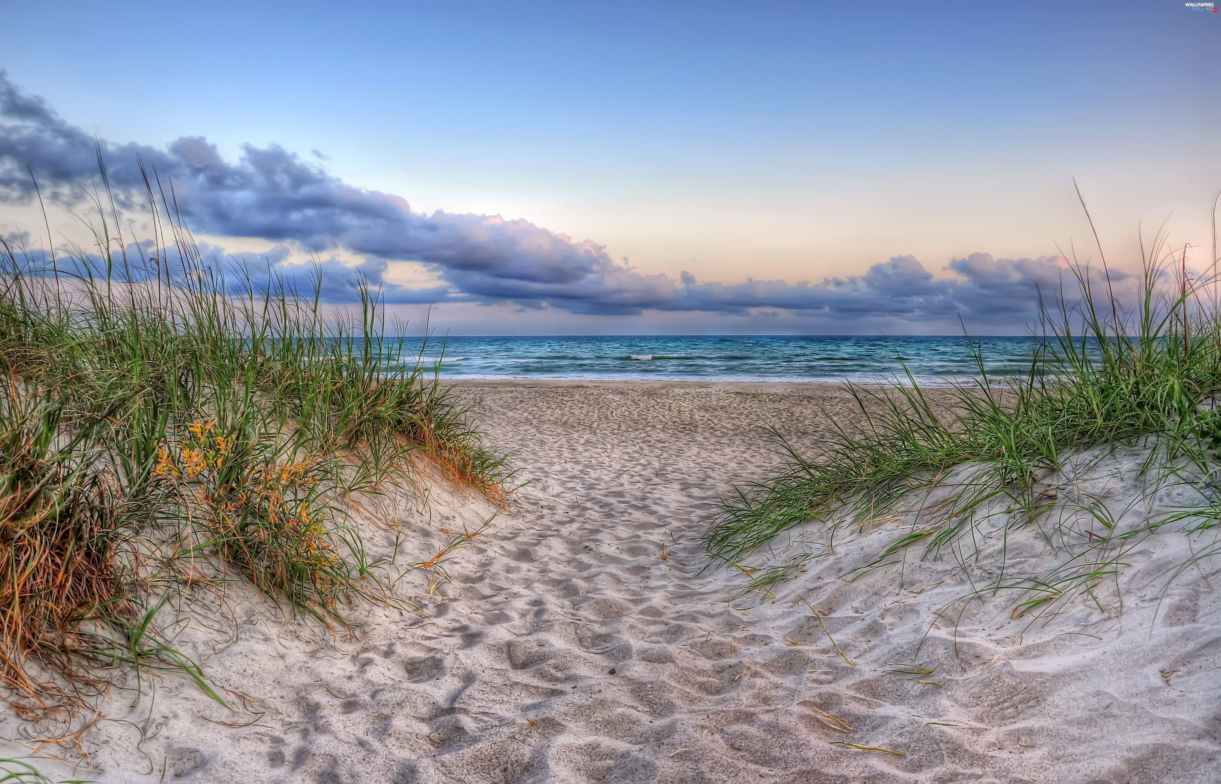 grass, Beaches, clouds, sea