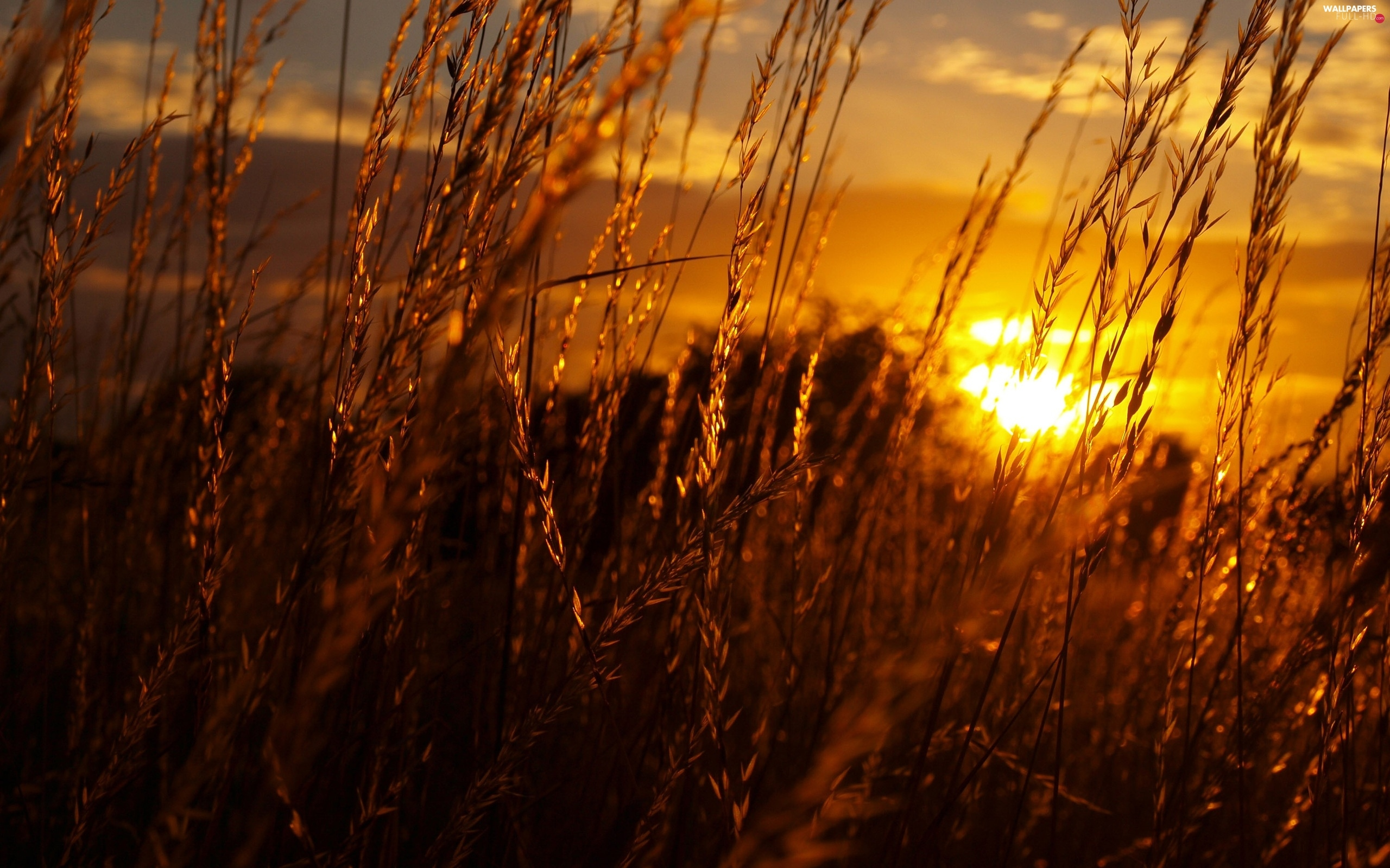 grass, Great Sunsets
