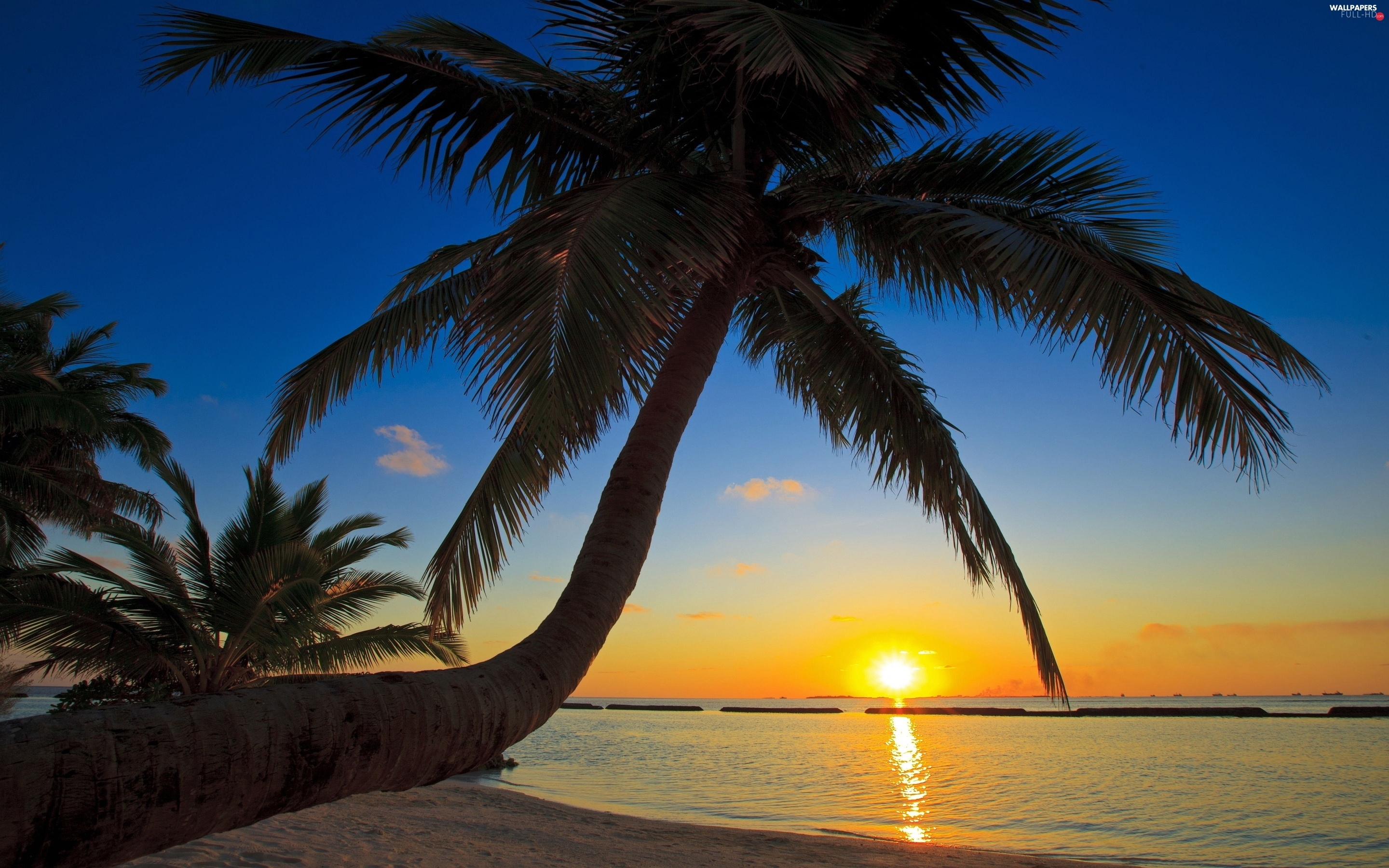 Great Sunsets, Palms, sea
