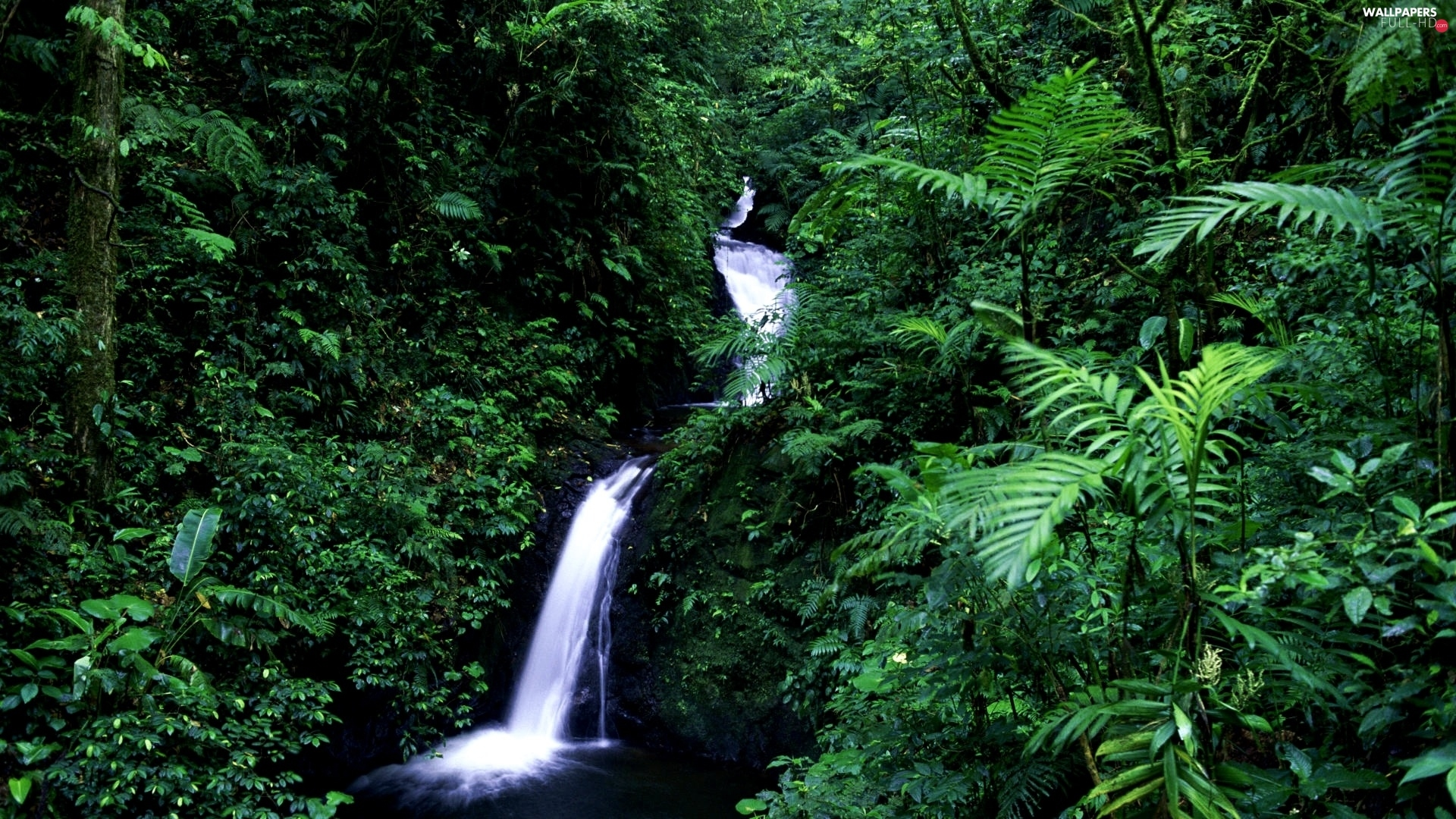 jungle, green, waterfall