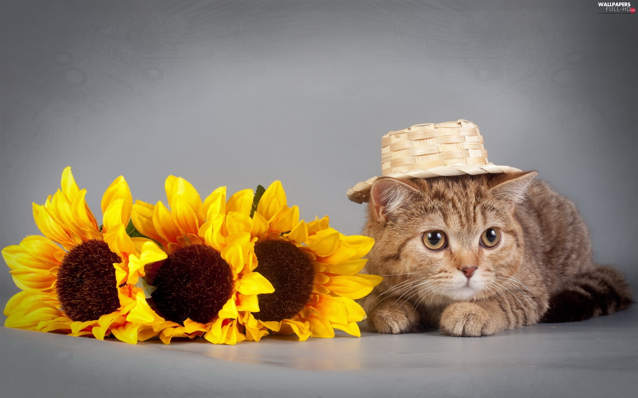 Hat, Nice sunflowers, kitten