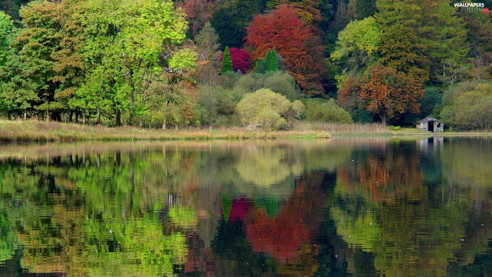 forest, lake, autumn