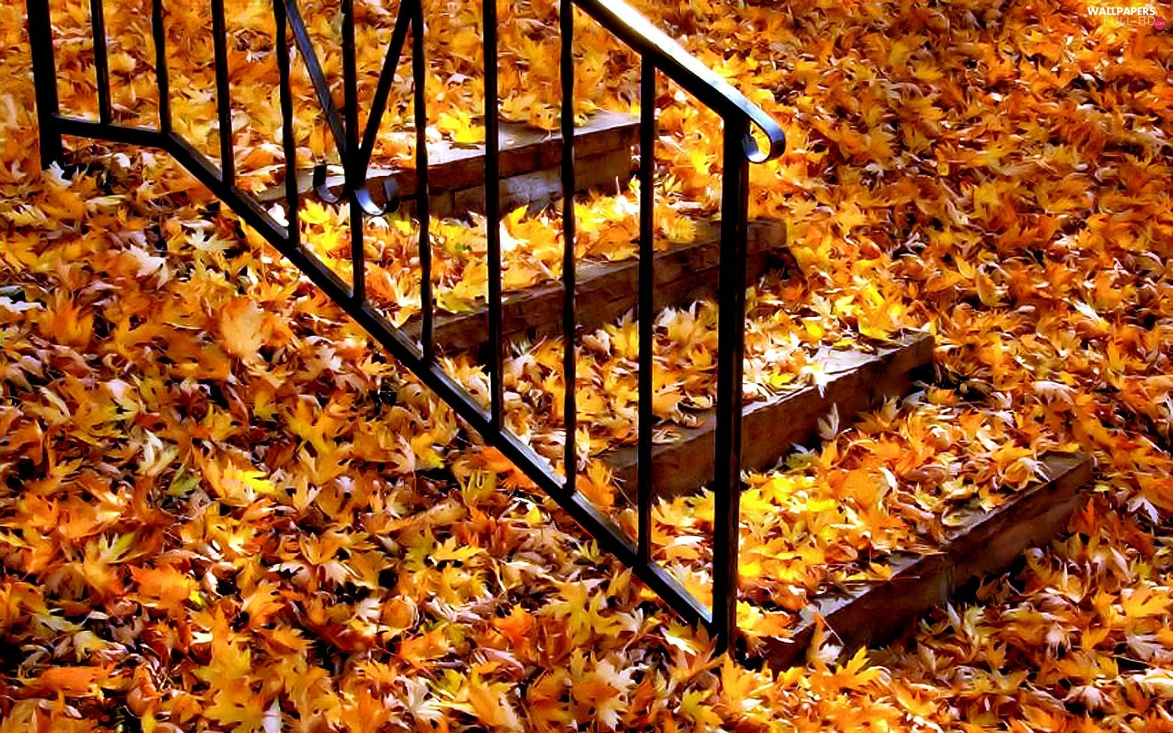 Autumn, Leaf, Stairs