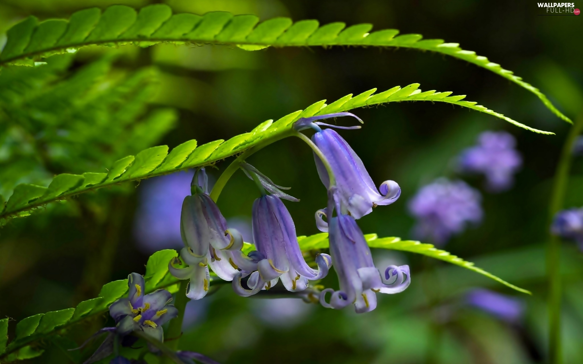 Leaf, ringtones, Flowers, purple