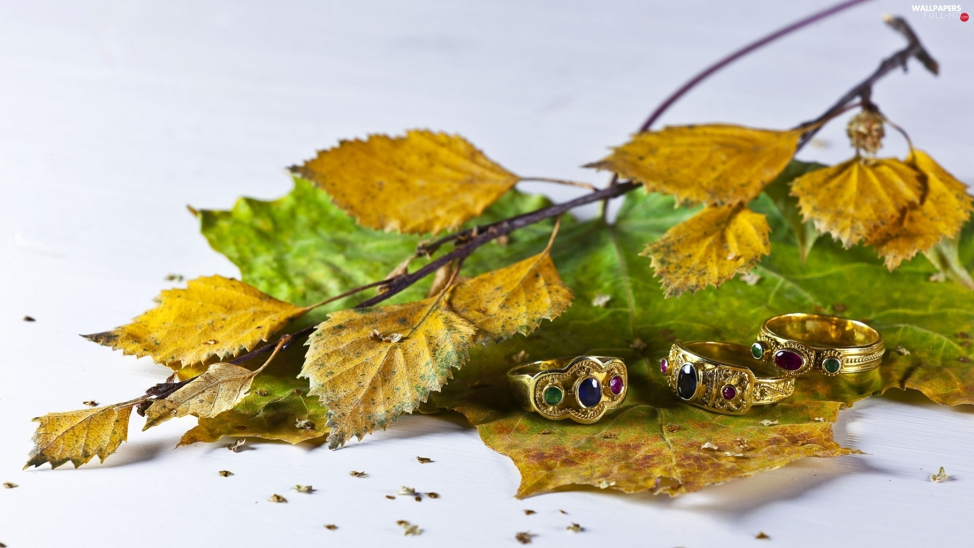 Leaf, twig, rings, autumn