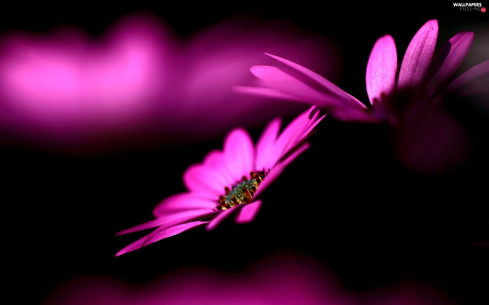 luminosity, sun, flash, Flowers, purple, ligh