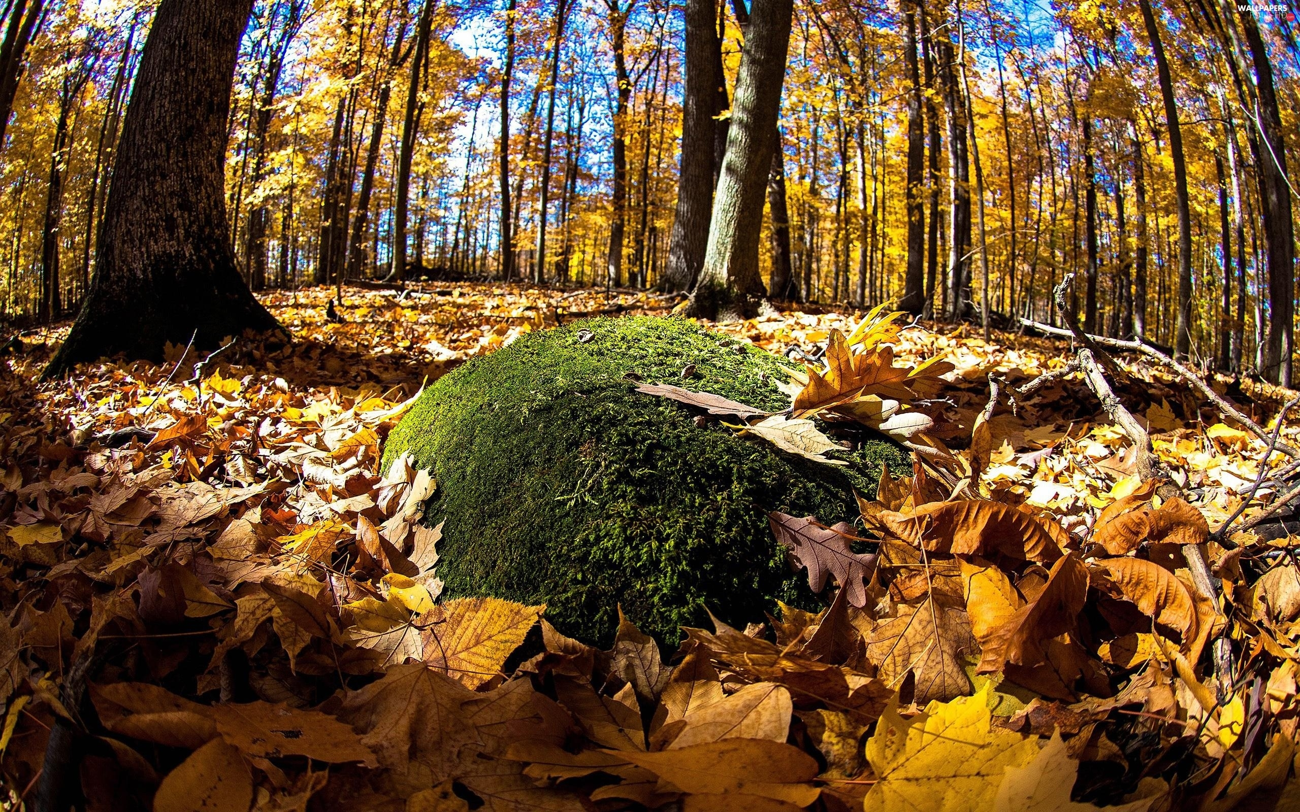 Moss, Leaf, forest, autumn