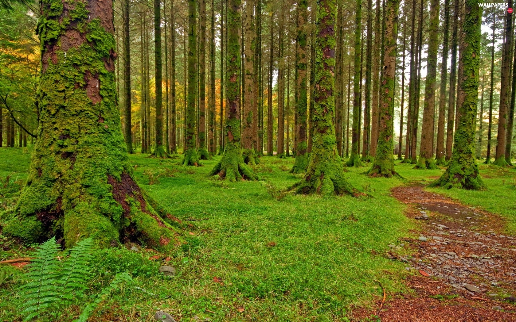 Moss, viewes, forest, grass, trees