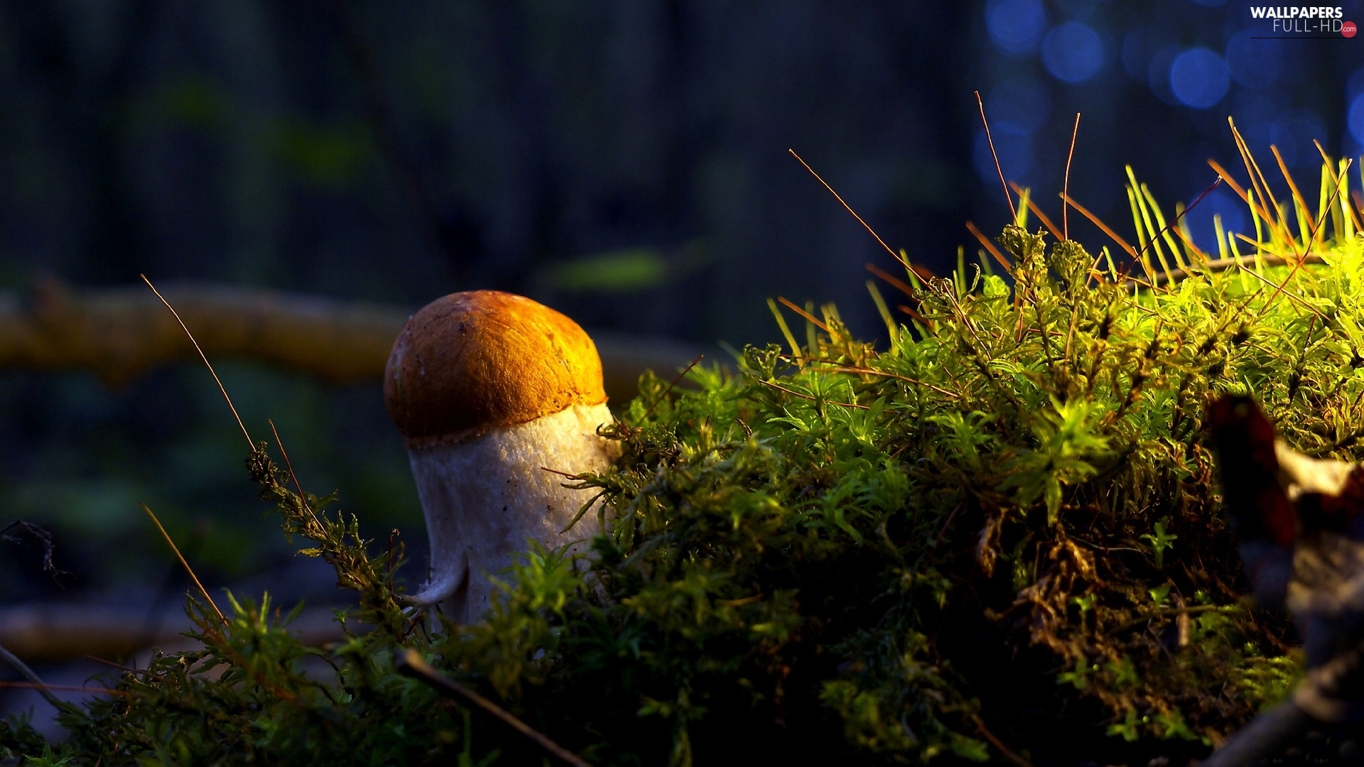 Moss, Mushrooms