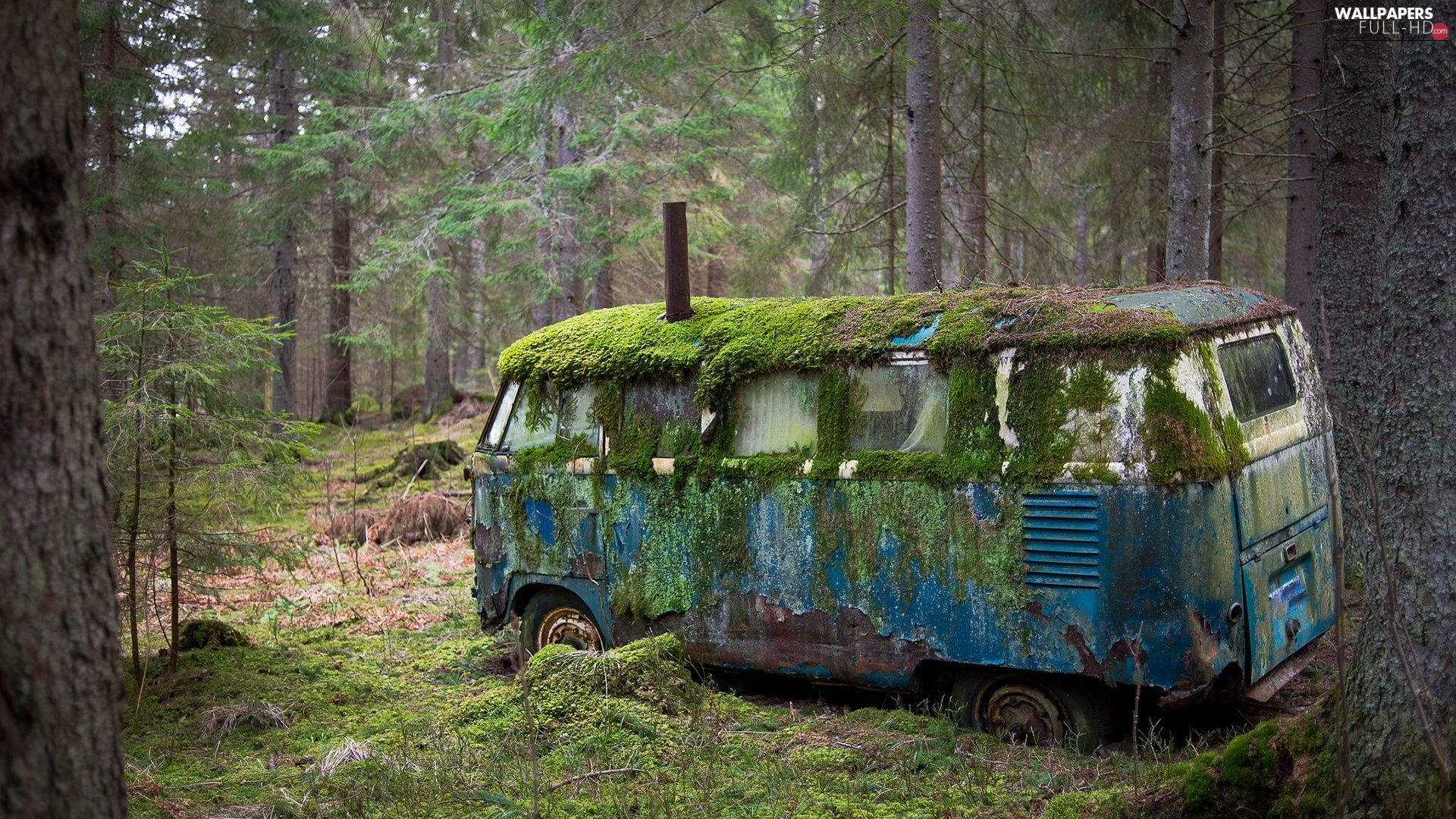 Moss, forest, rusty, Automobile