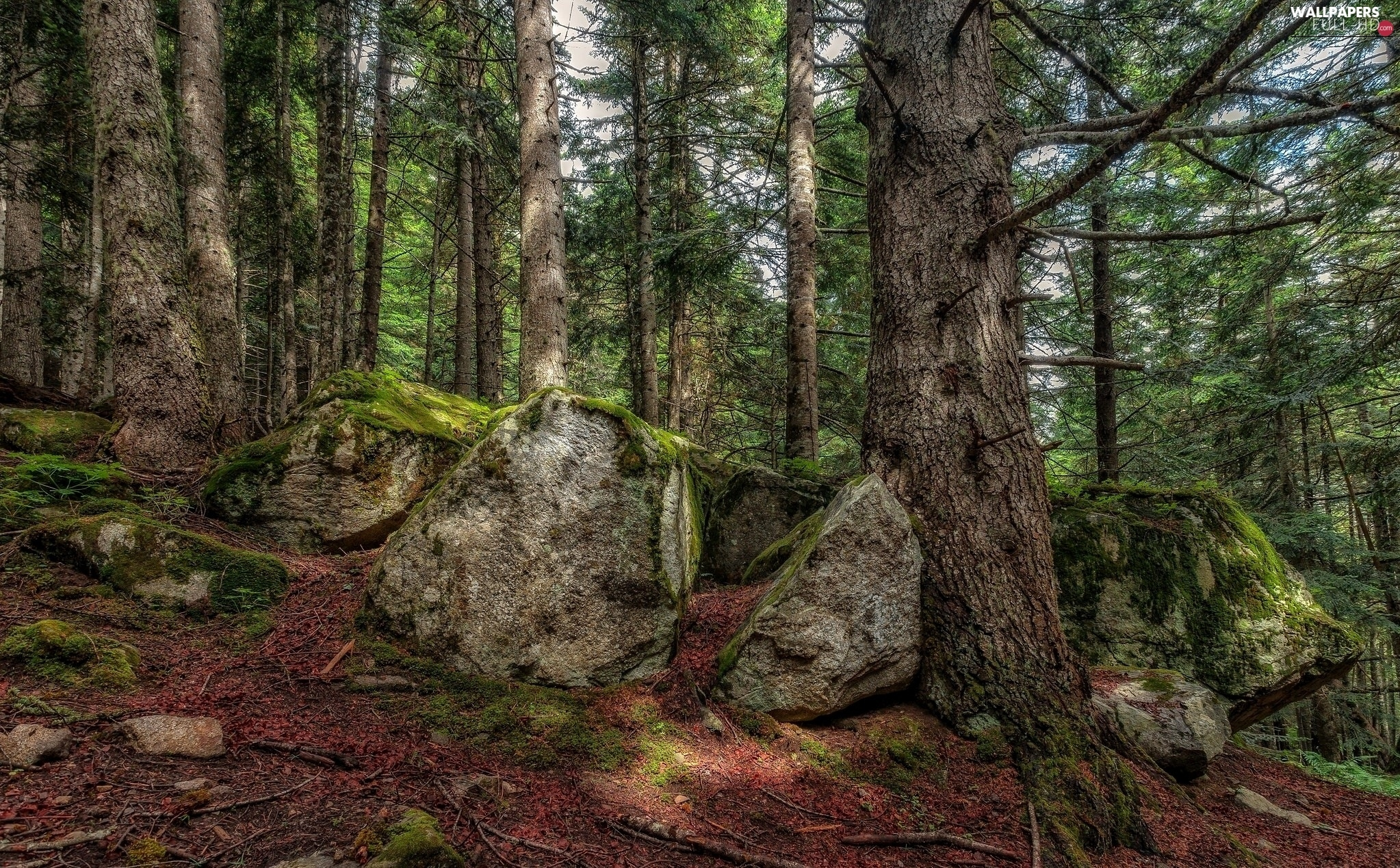 Stones, Moss, forest