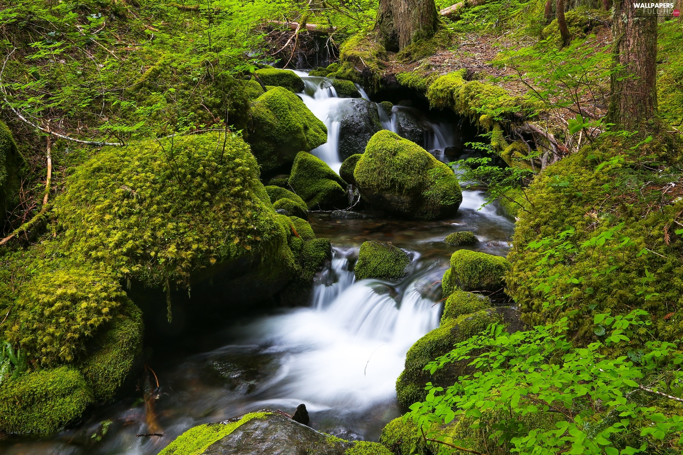 Moss, forest, Stones, River, waterfall, stream