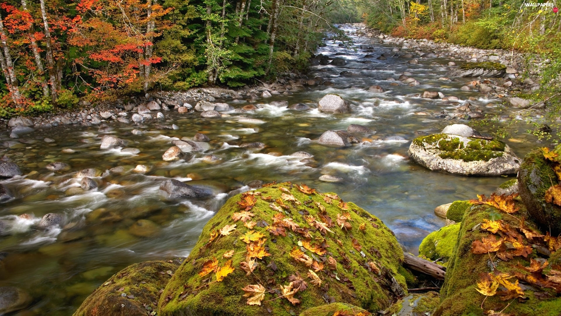 Leaf, mossy, stream, autumn, boulders, forest, stony