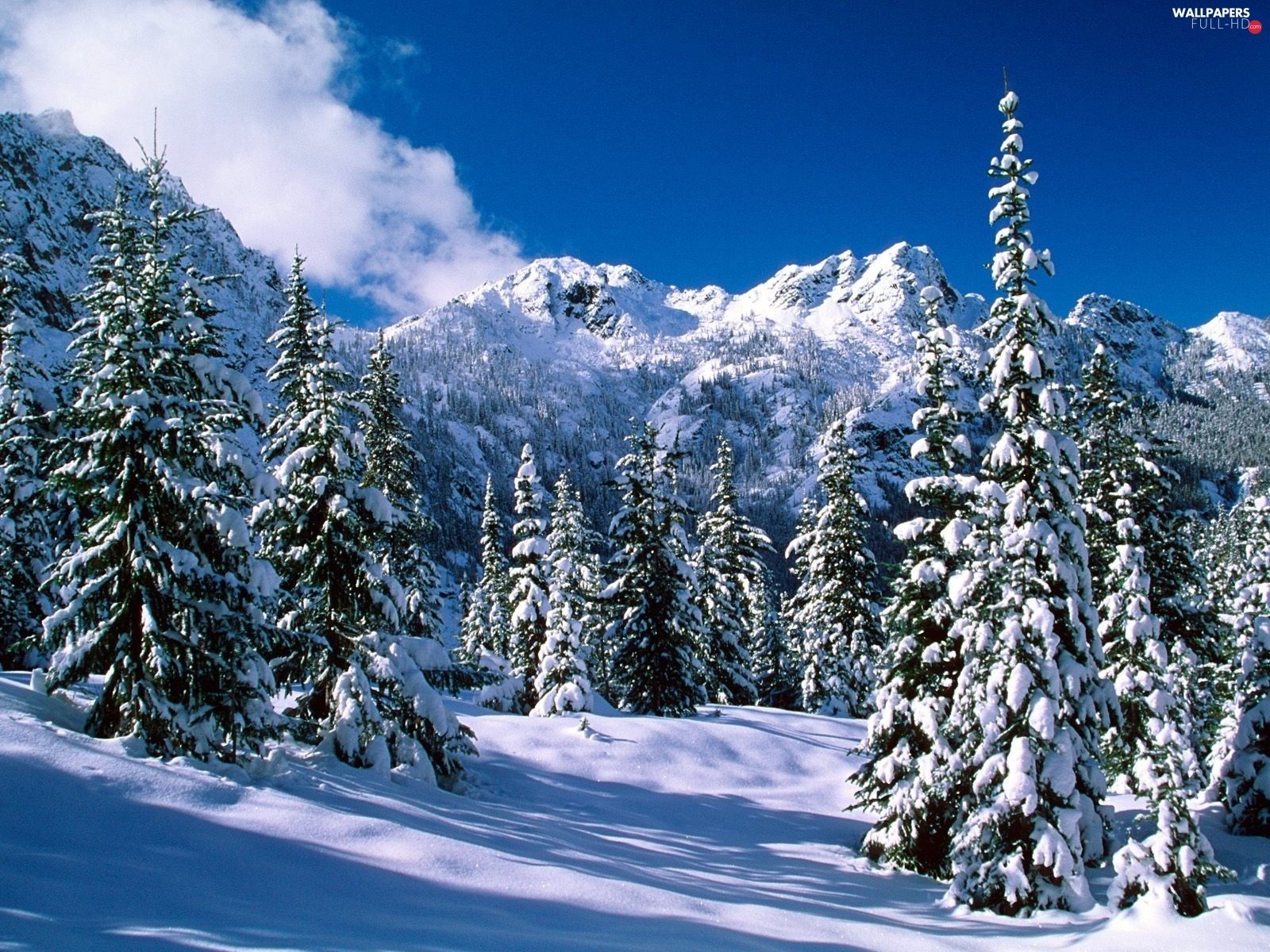 Mountains, viewes, snowy, snow, trees