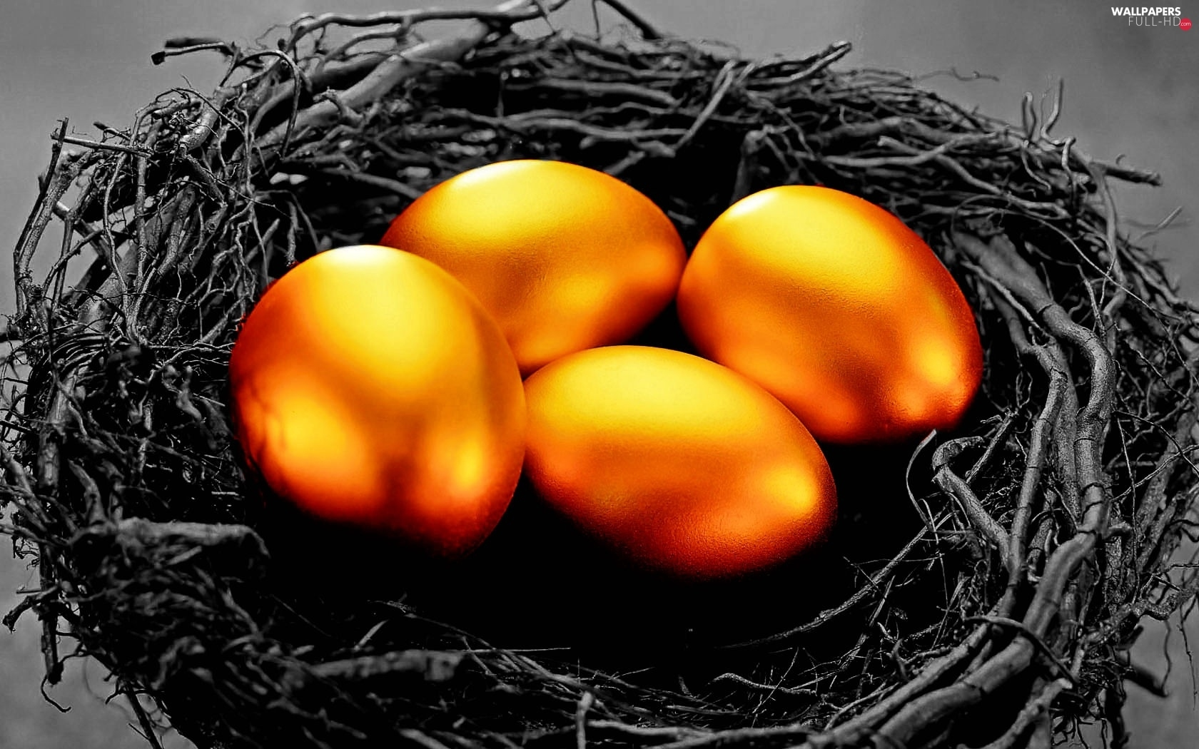 eggs, nest, Golden