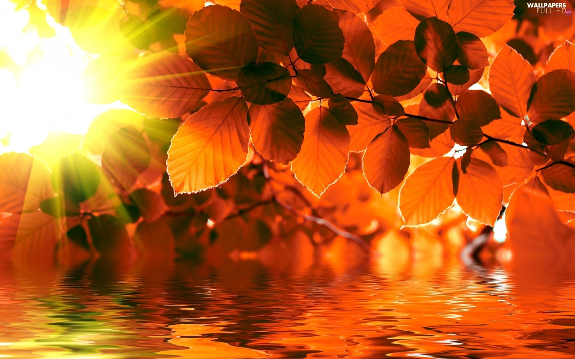 rays of the Sun, water, autumn, Leaf