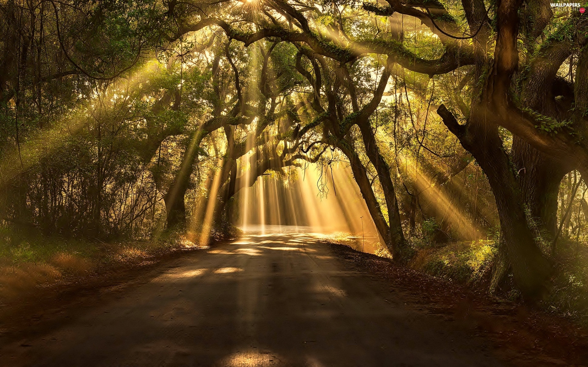 rays of the Sun, viewes, Way, trees