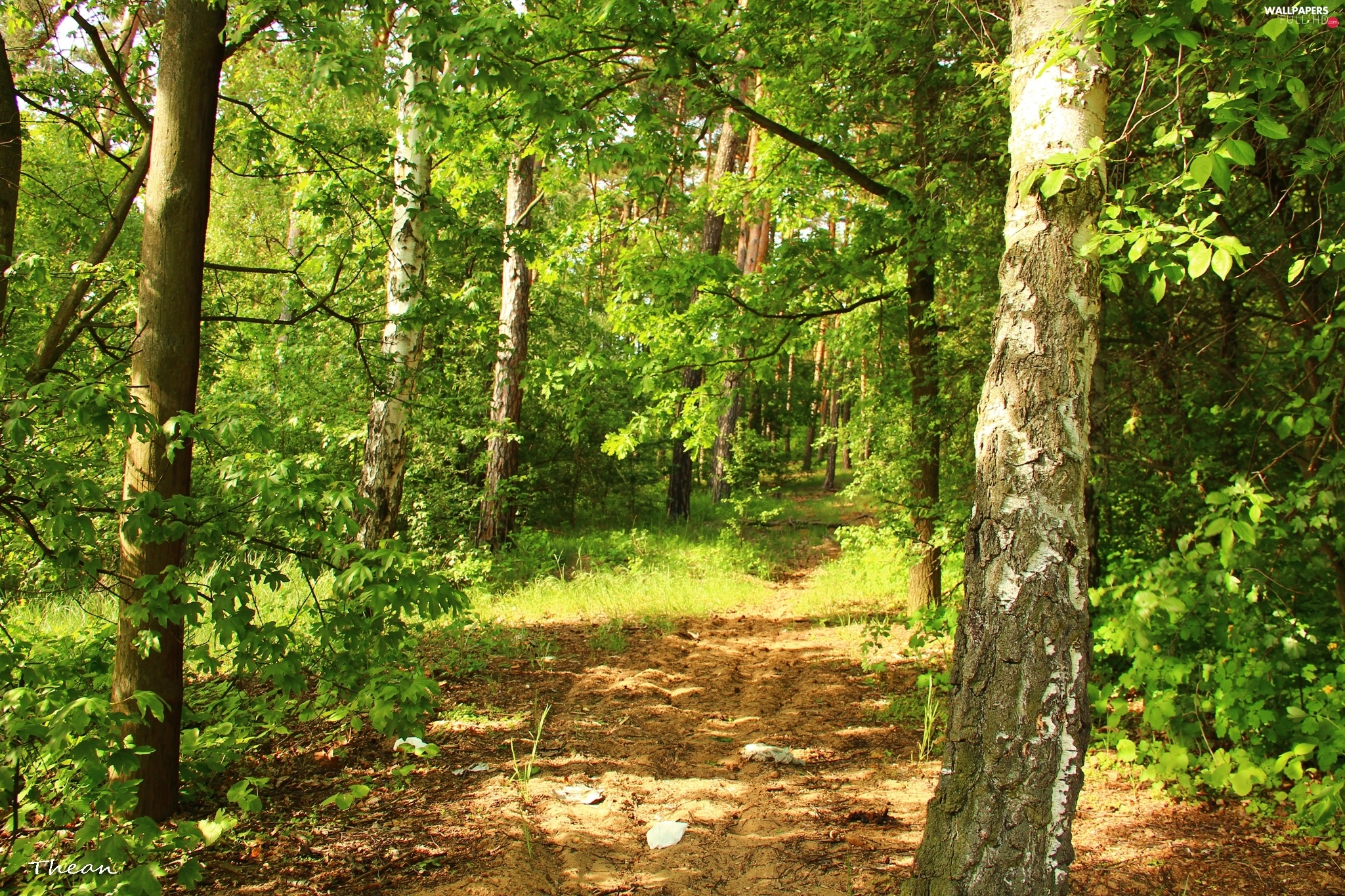 Path, viewes, forest, trees