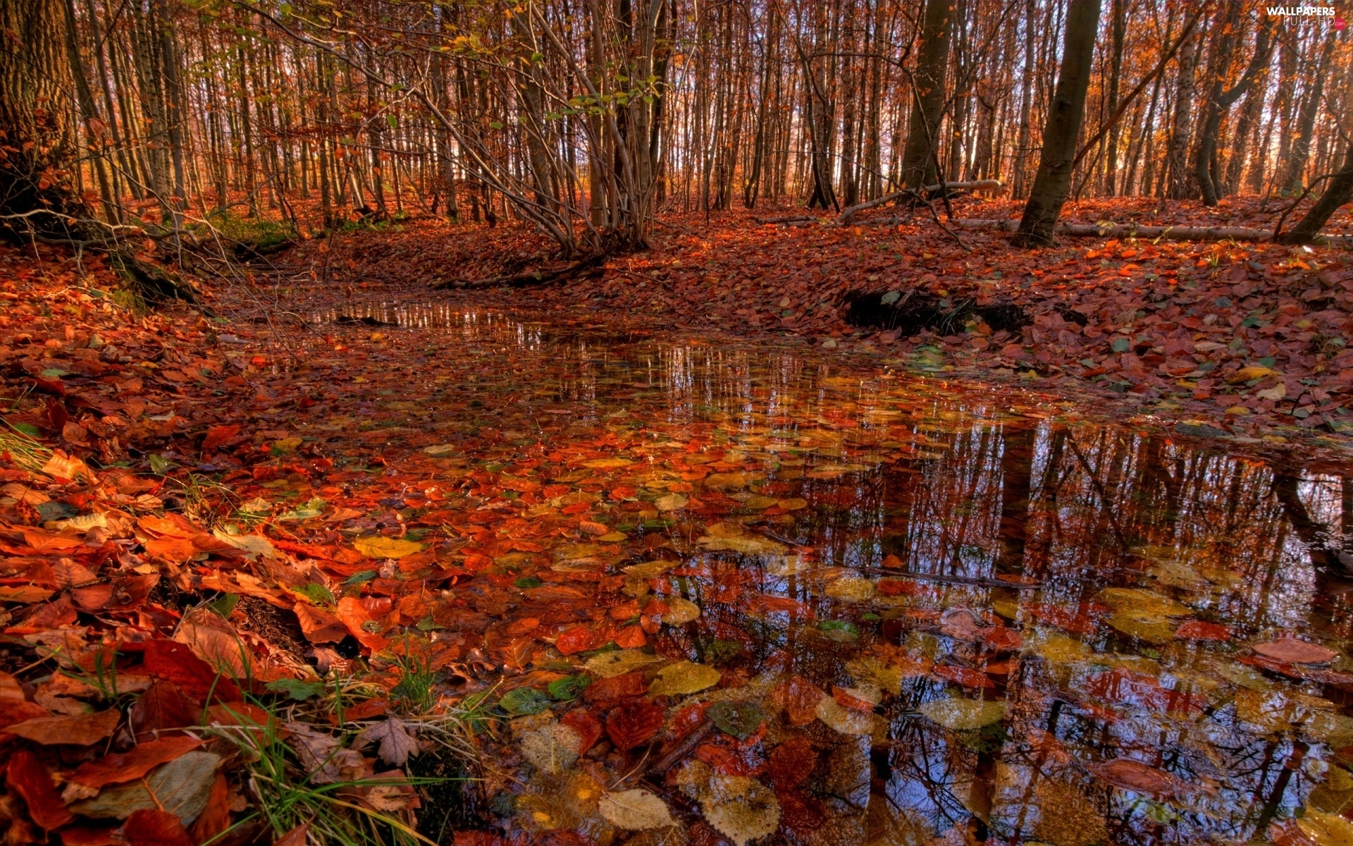 puddle, Leaf, autumn, forest