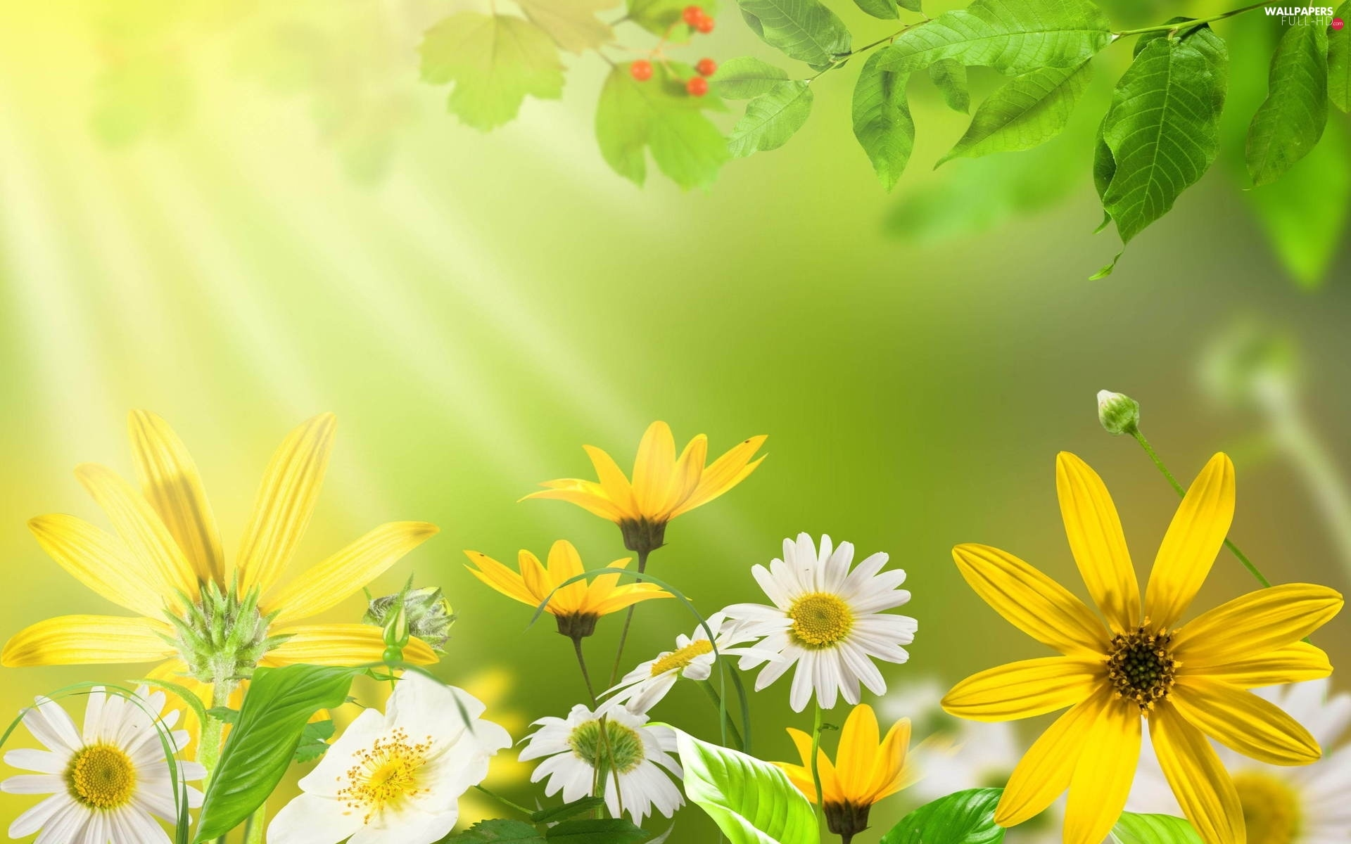 Spring, rays of the Sun, Flowers, Leaf