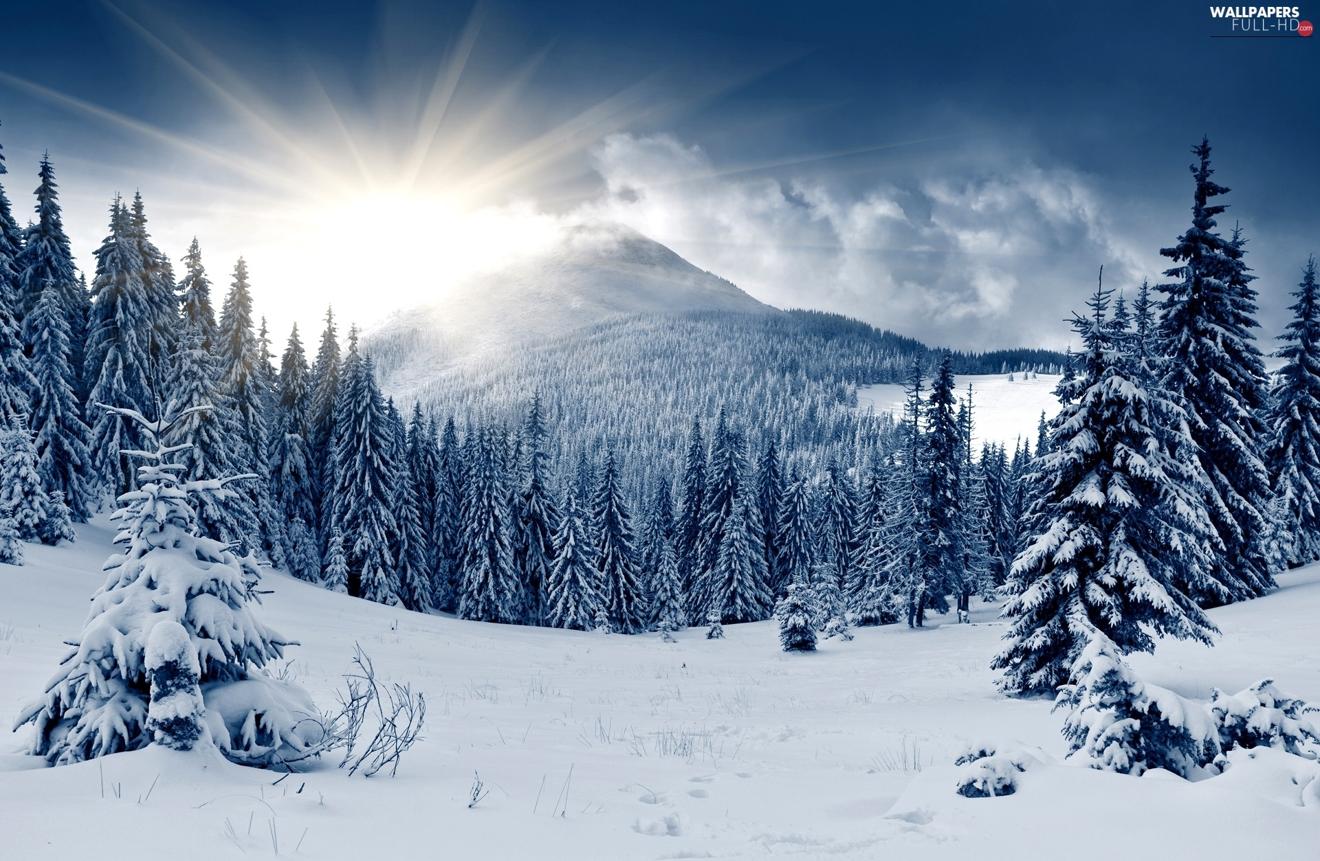 rays, Spruces, Mountains, winter, sun, snow