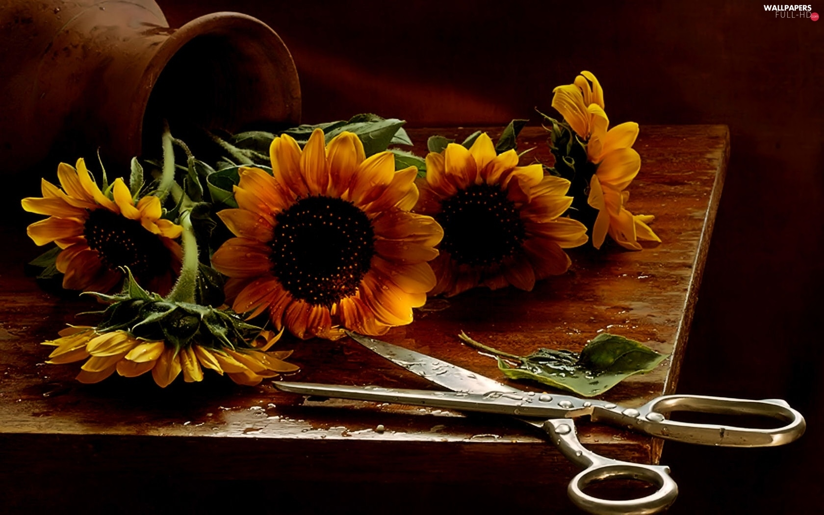 sunflowers, scissors, bouquet