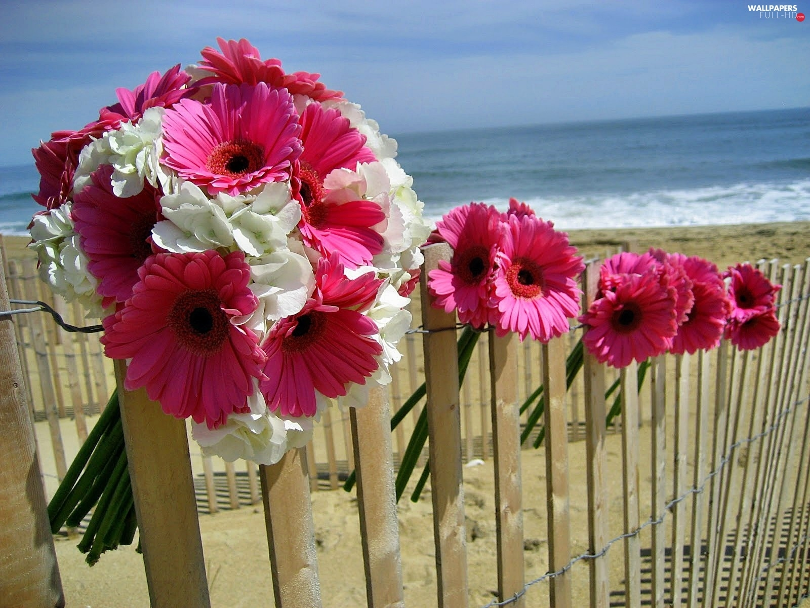 sea, Beaches, Pink, gerberas