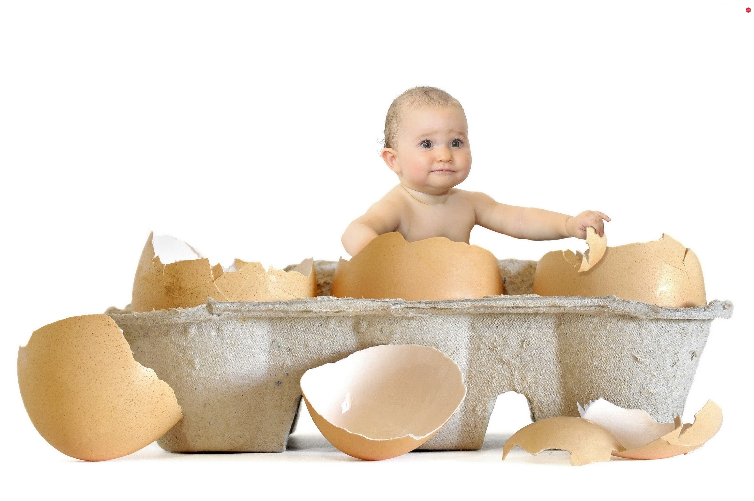 eggs, shell, Kid