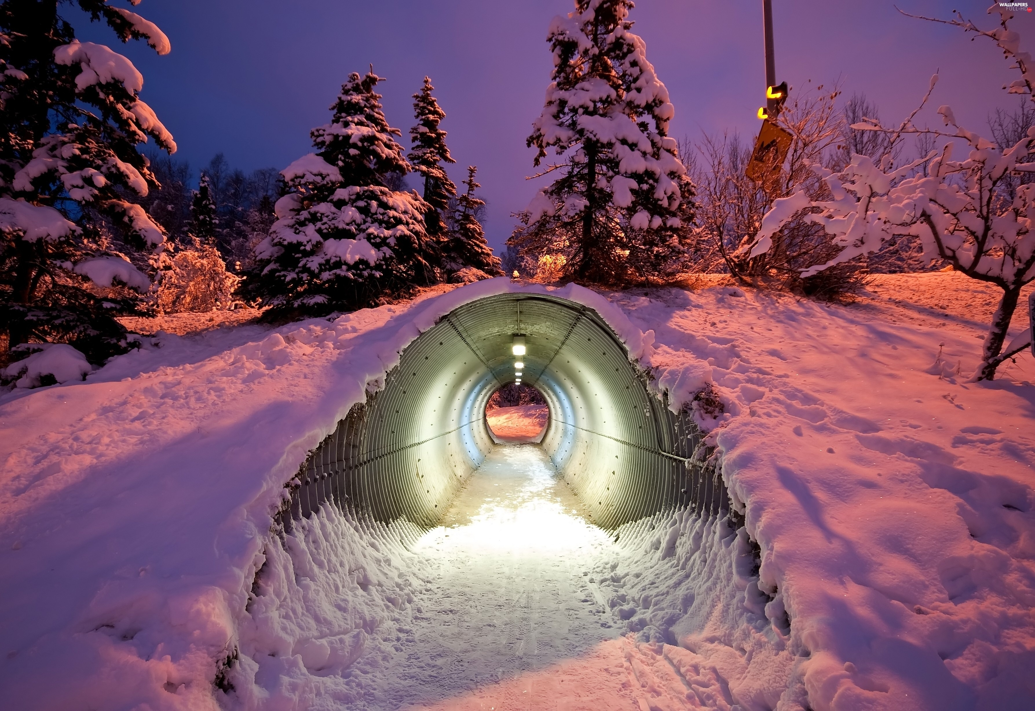 snow, tunnel, trees, twilight, viewes