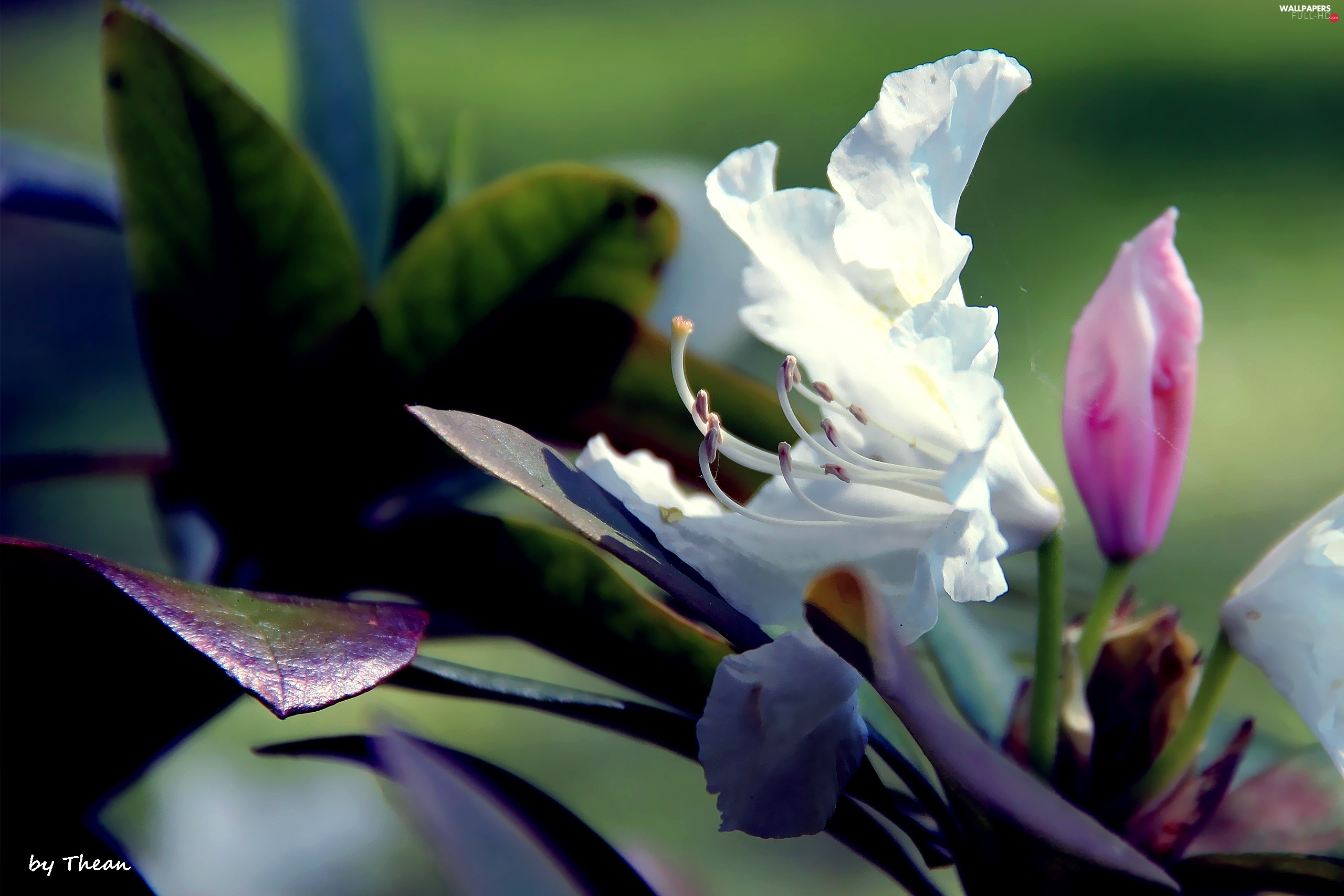 Spring, Leaf, White, Colourfull Flowers