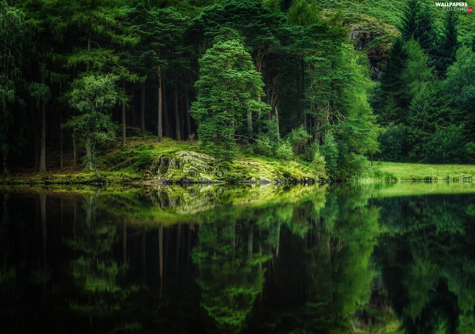 summer, reflection, forest, lake