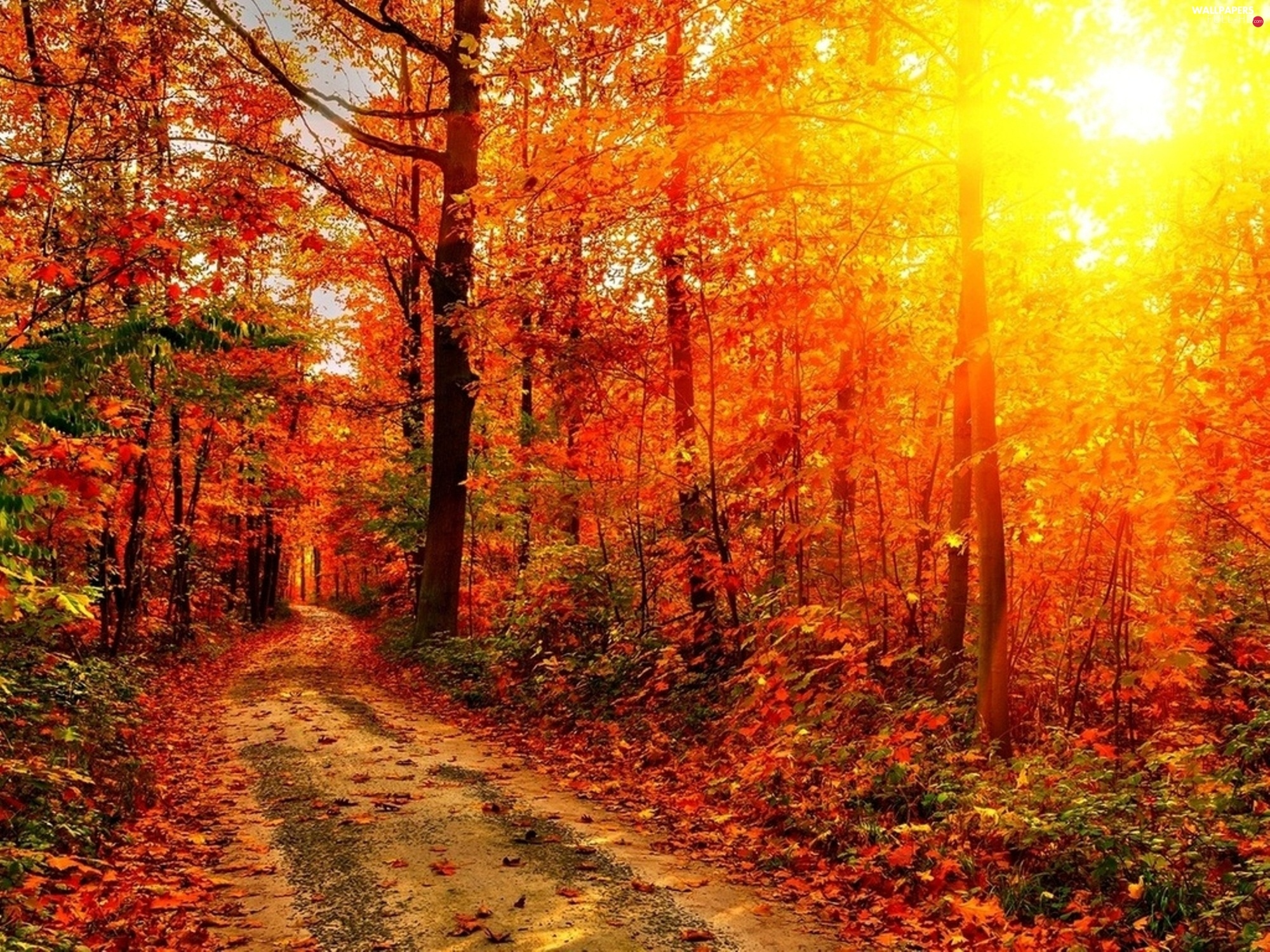 sun, rays, forest, autumn, Way