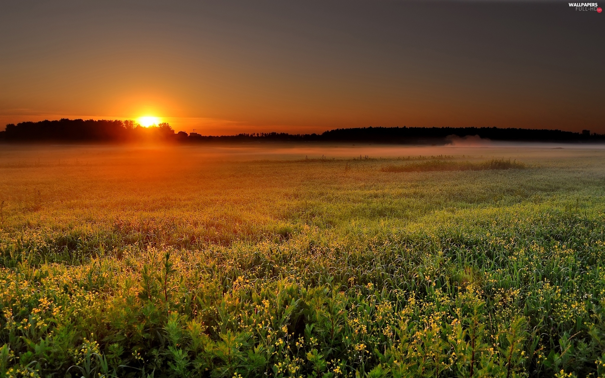 sun, The setting, Floral, Meadow