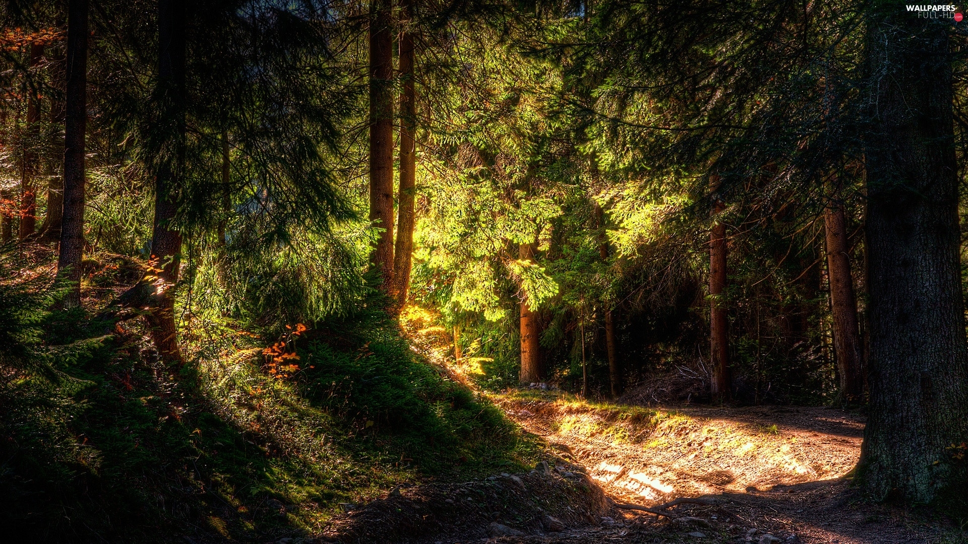 sun, rays, forest, Way