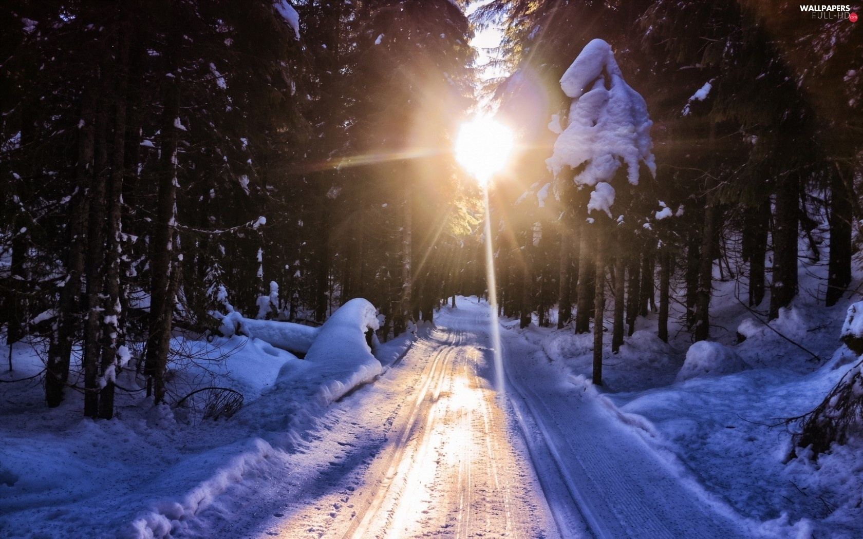 sun, rays, forest, winter, Way