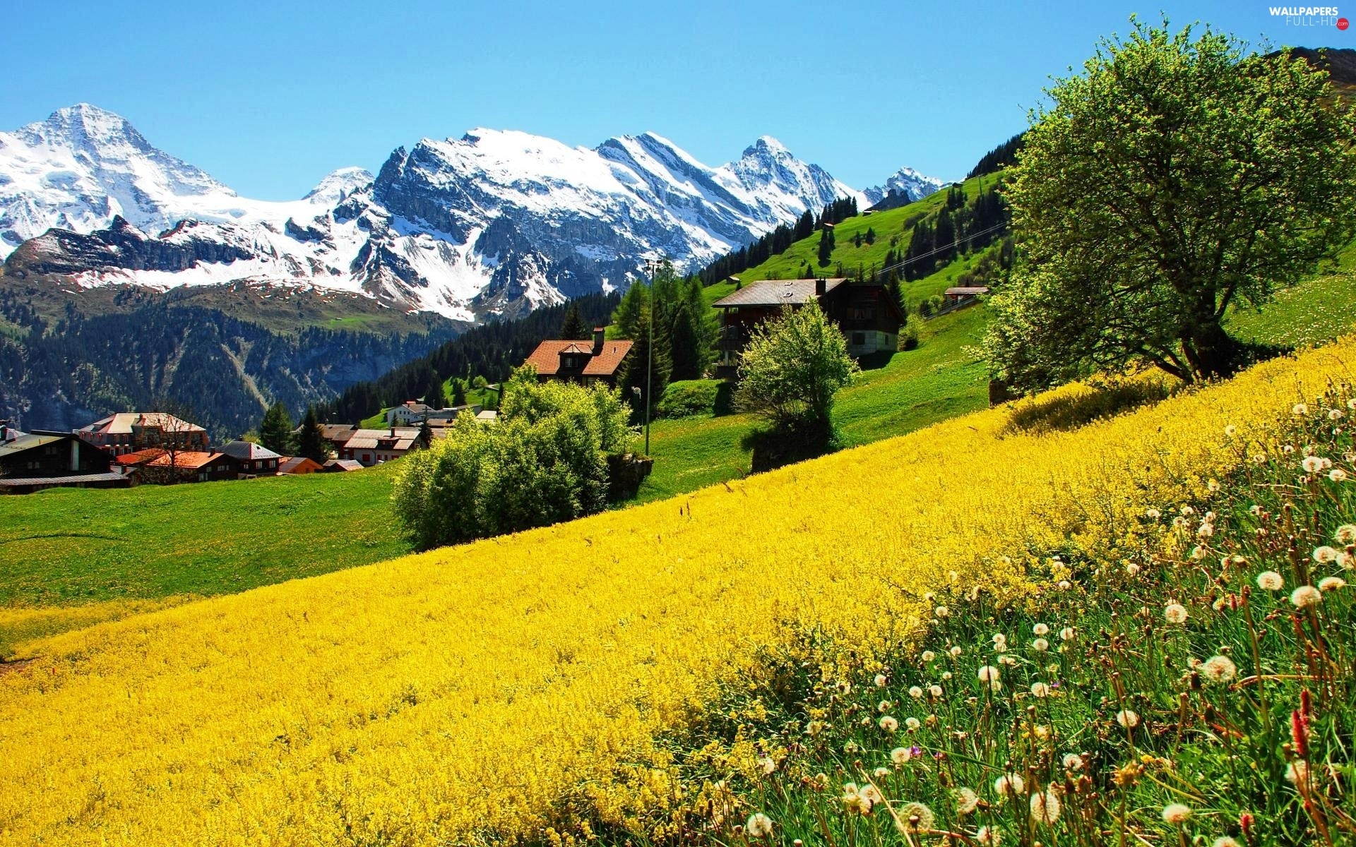 Switzerland, Houses, Mountains, Meadow