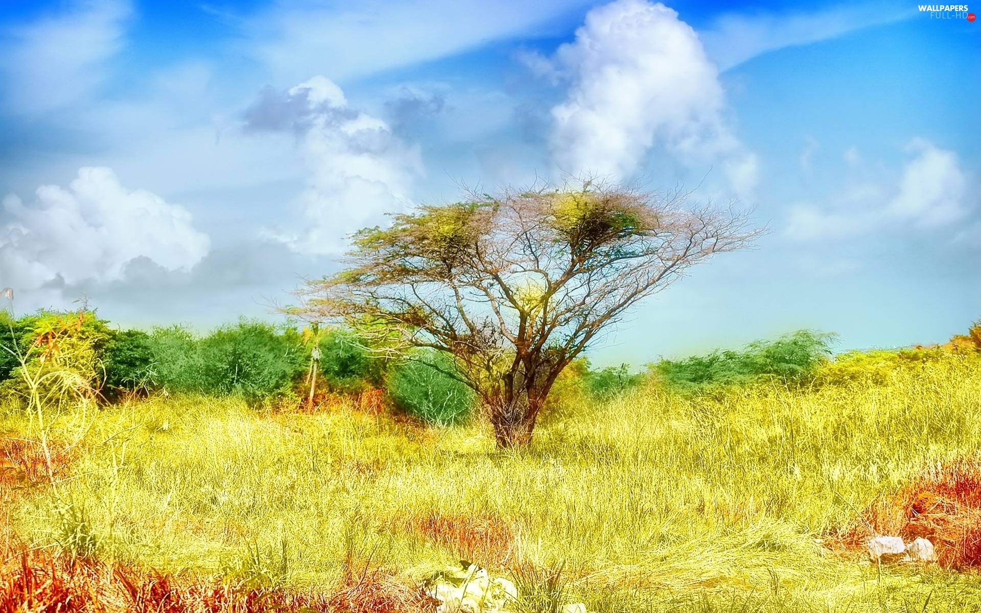 trees, grass, clouds, color