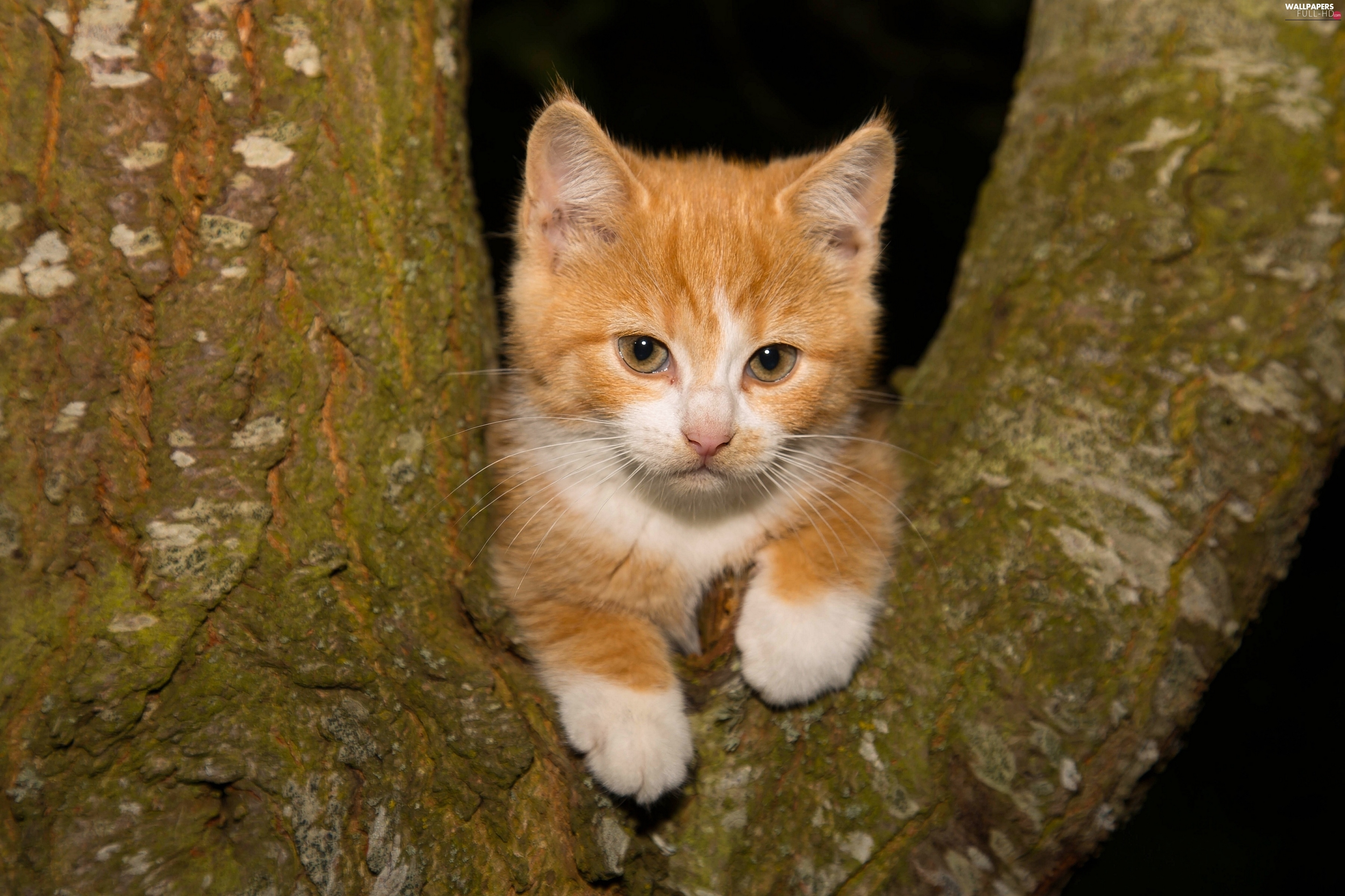 trees, kitten, small, ginger