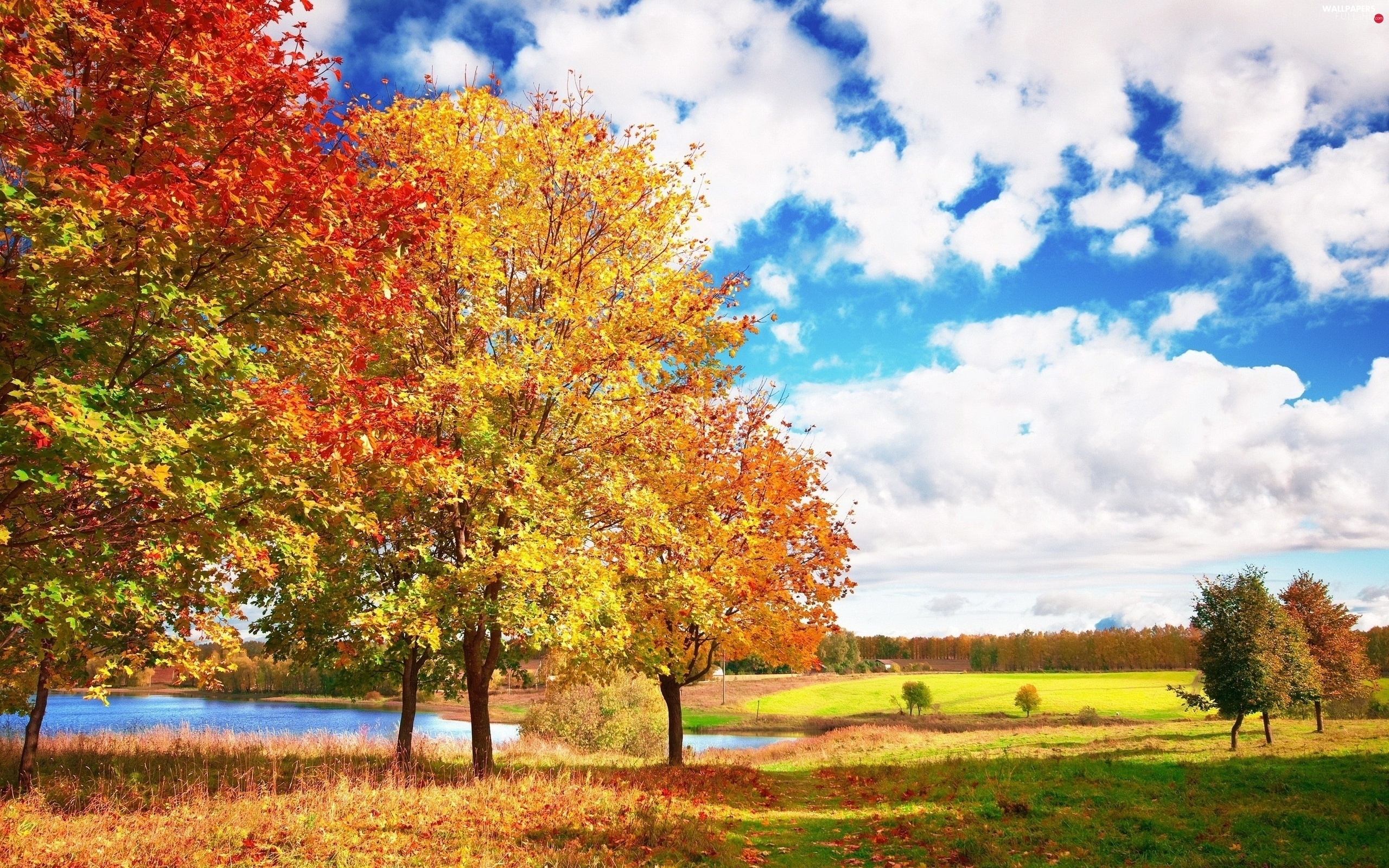 trees, lake, clouds, autumn, viewes, medows