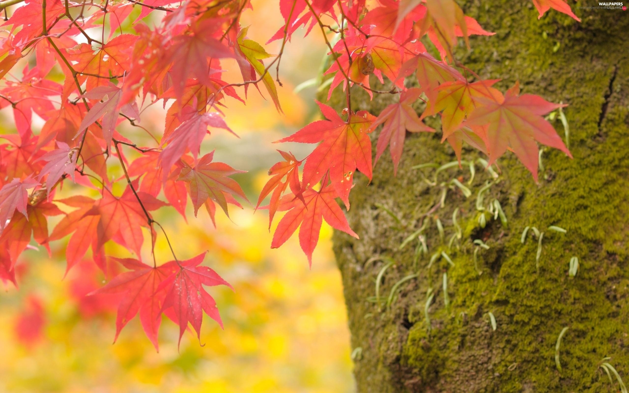 trees, trunk, Red, viewes, leaves