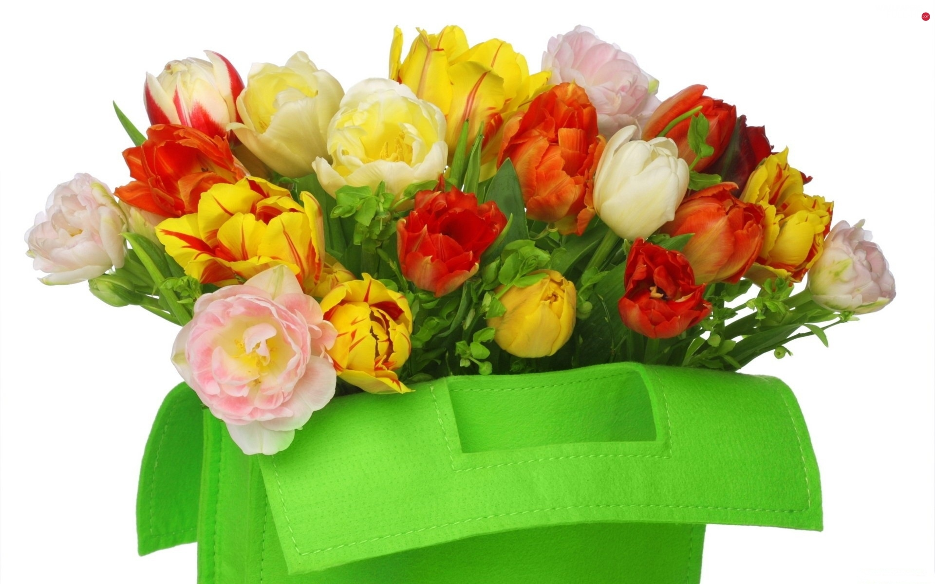 Tulips, color, Green, bag